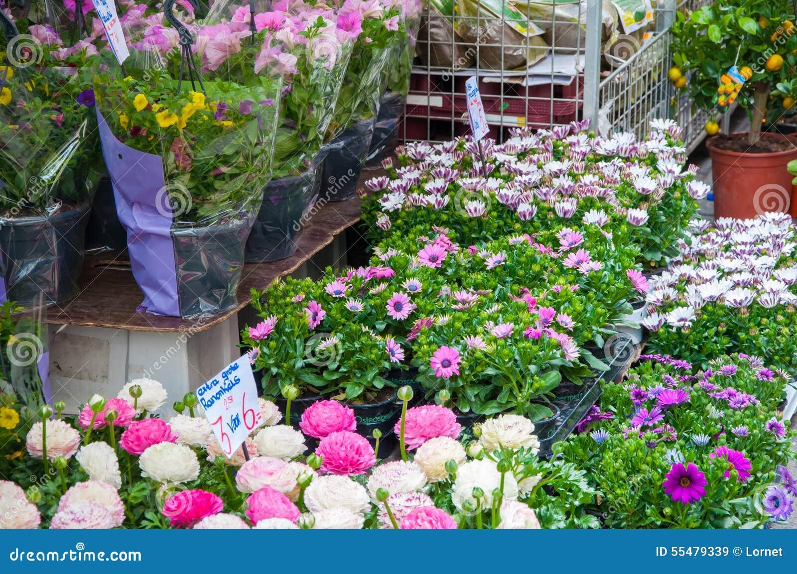 Plantes d 39 int rieur d 39 abondance sur le march de fleur d for Les plantes d interieur