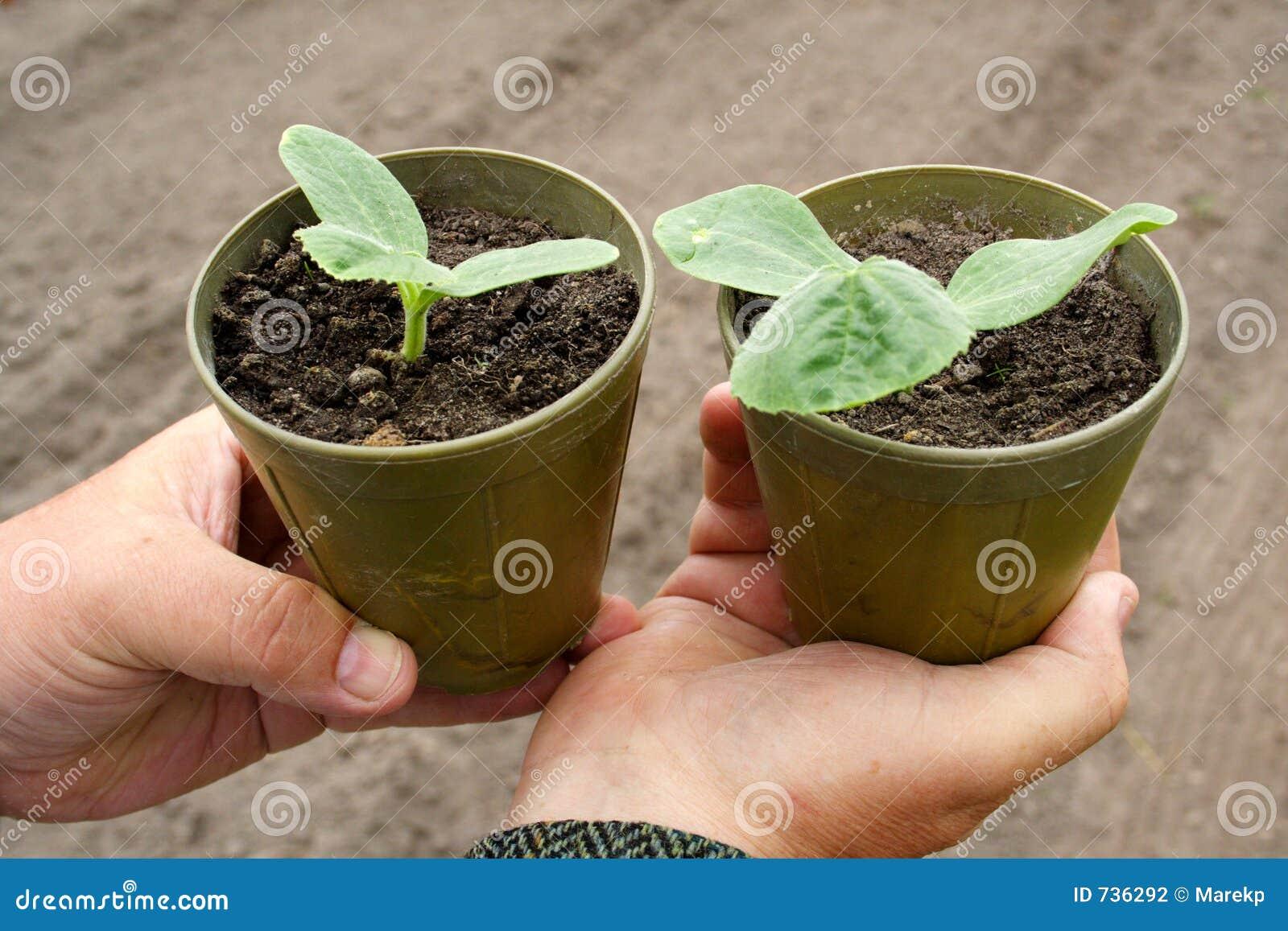 Plantes dans des bacs