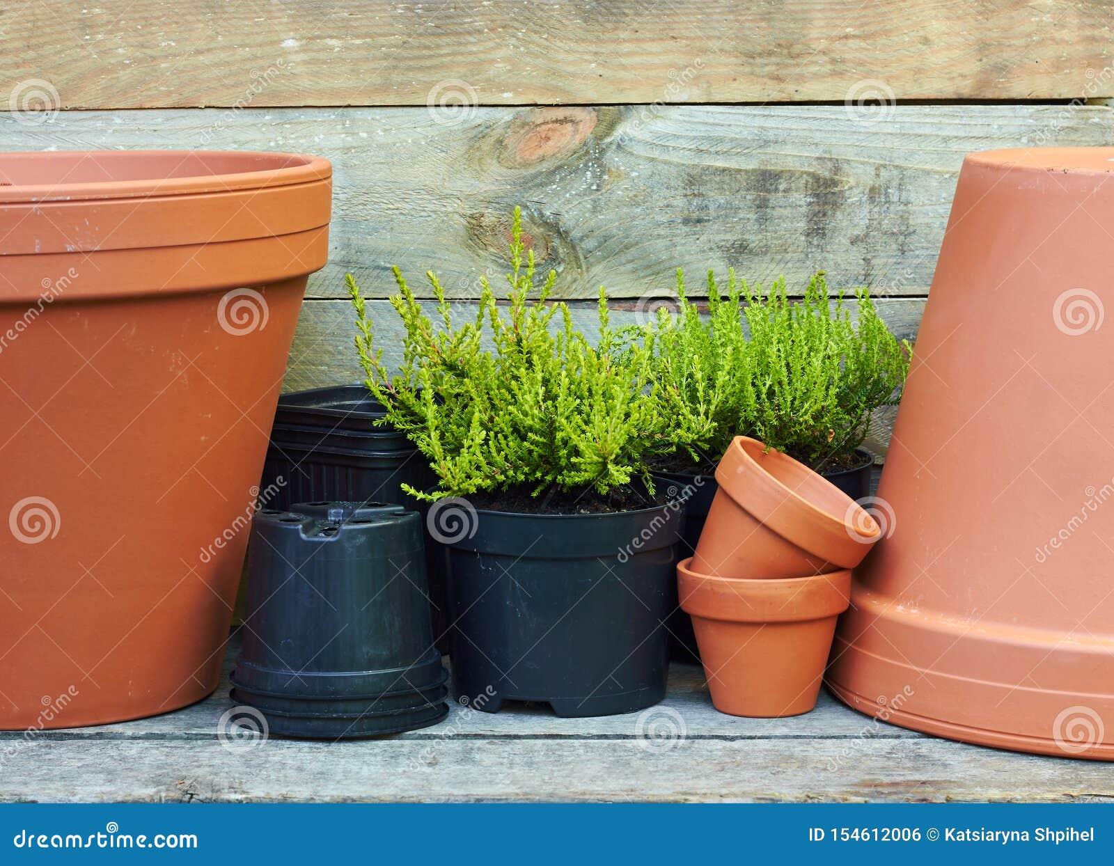 Gros Pot Fleur Plastique plantes de conifères autour de pots de fleurs d'argile en