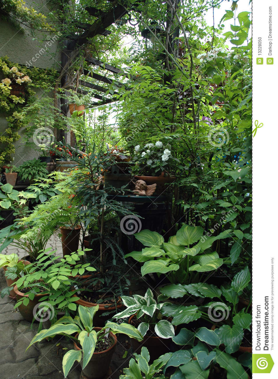 plantes en pot dans la place de jardin d 39 ombre photo stock