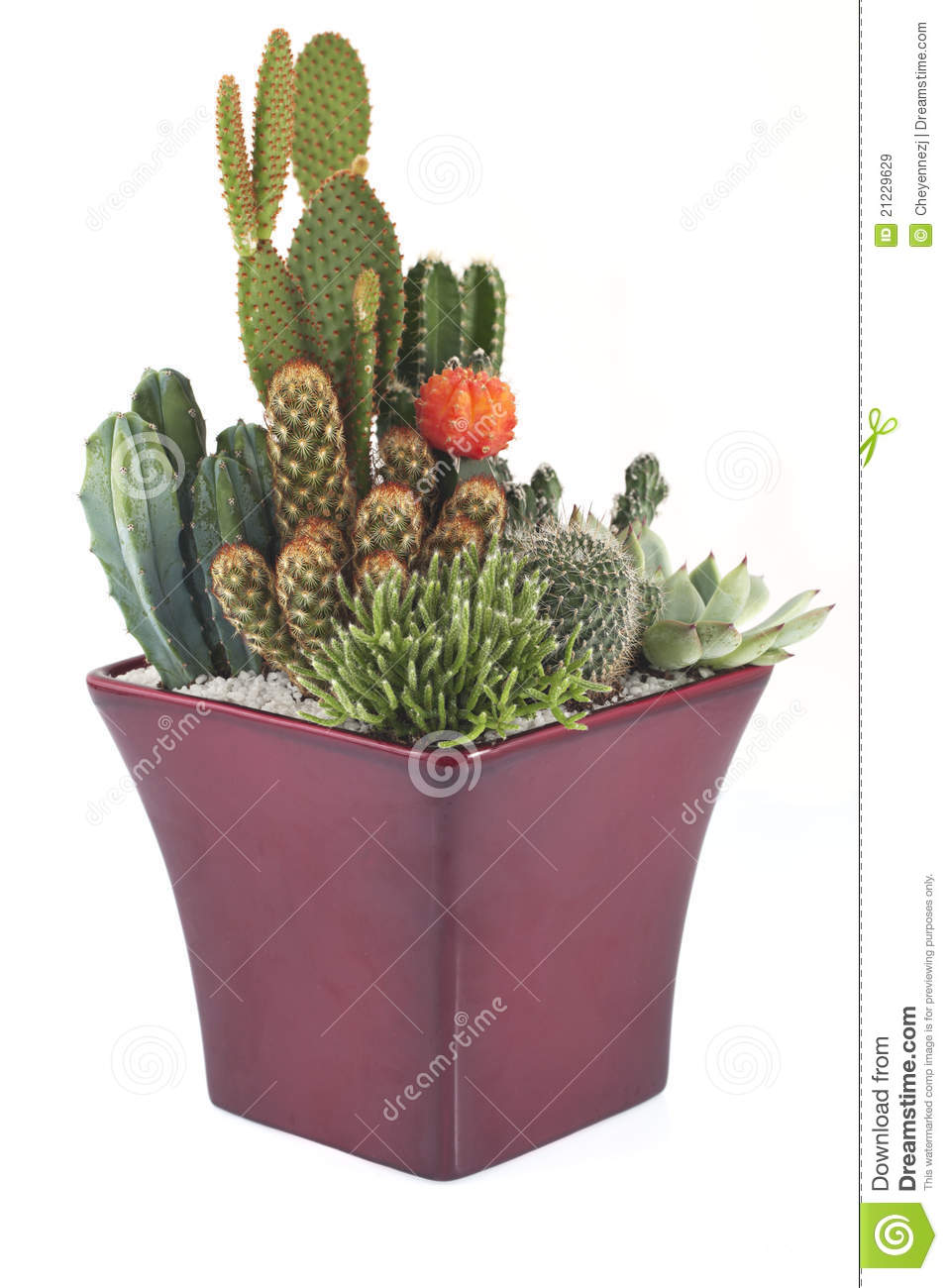 plantes en pot de cactus image stock image du earthenware 21229629. Black Bedroom Furniture Sets. Home Design Ideas