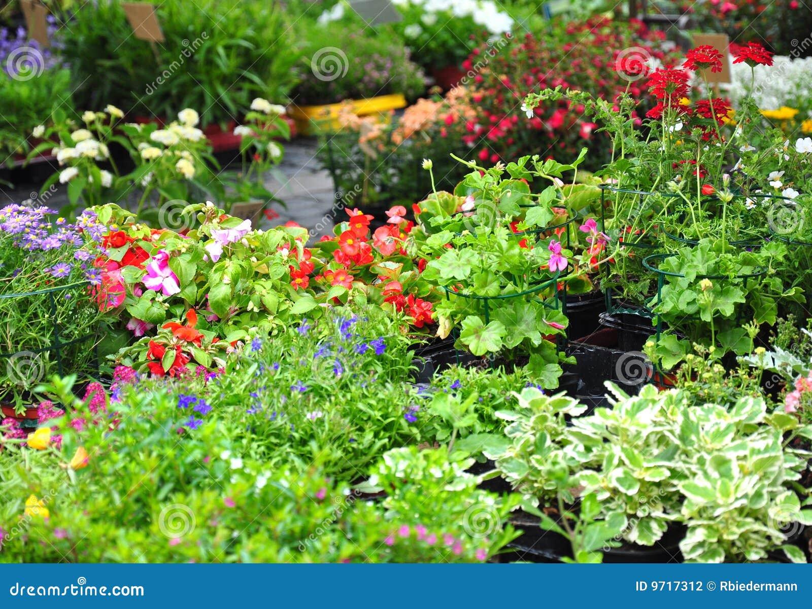 plantes et fleurs photographie stock image 9717312