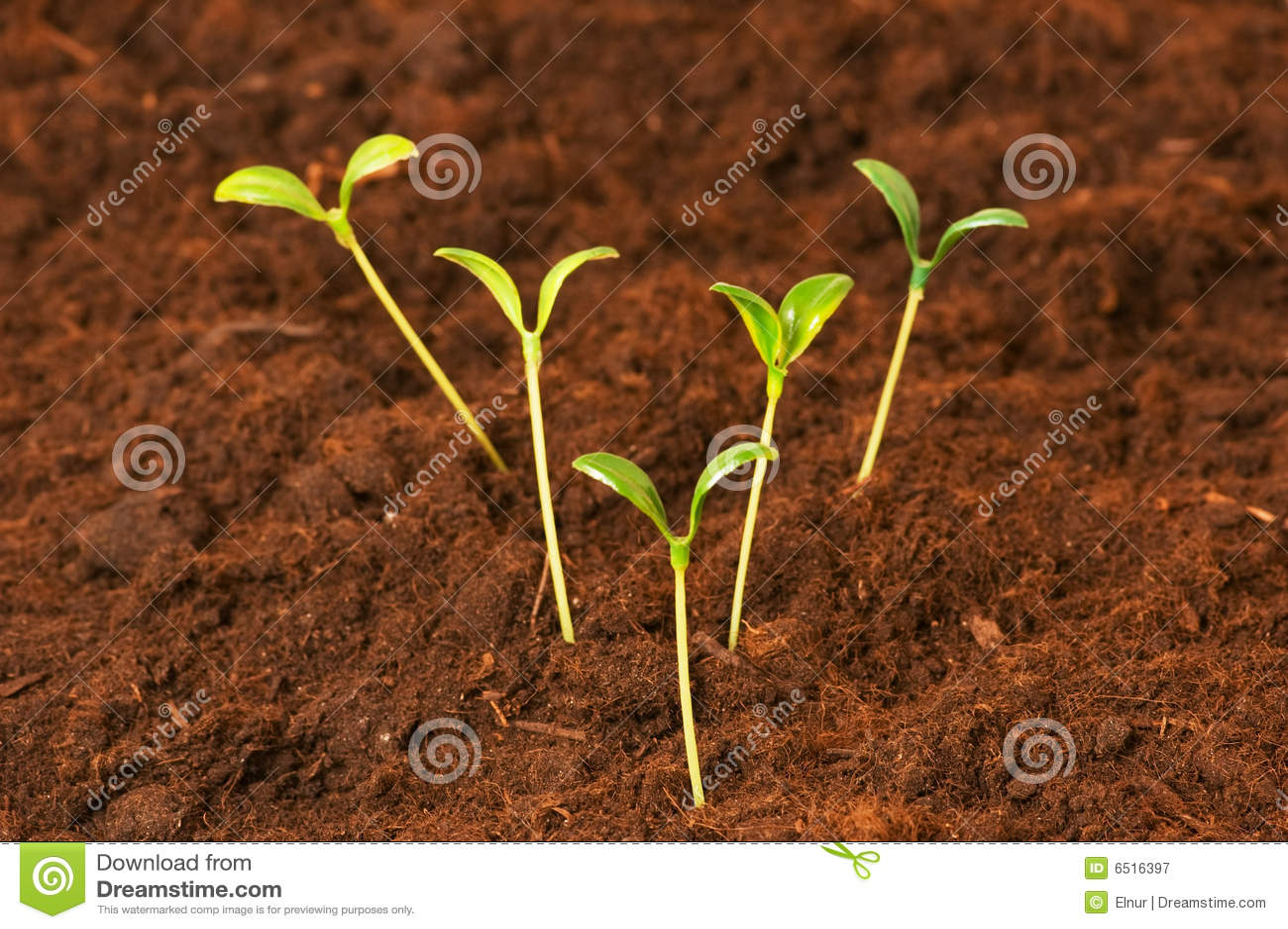 Plantes neuves de durée verte de concept