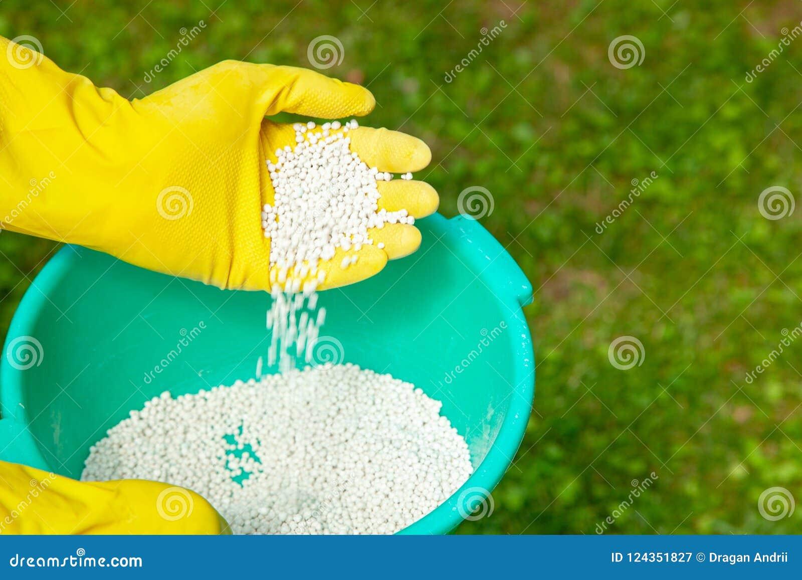Plantes, pelouses, arbres et fleurs de fertilisation Le jardinier dans les gants tient les boules blanches d engrais sur l herbe