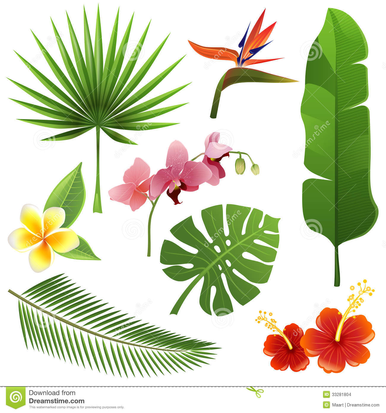 Plantes Tropicales Images Stock Image 33281804