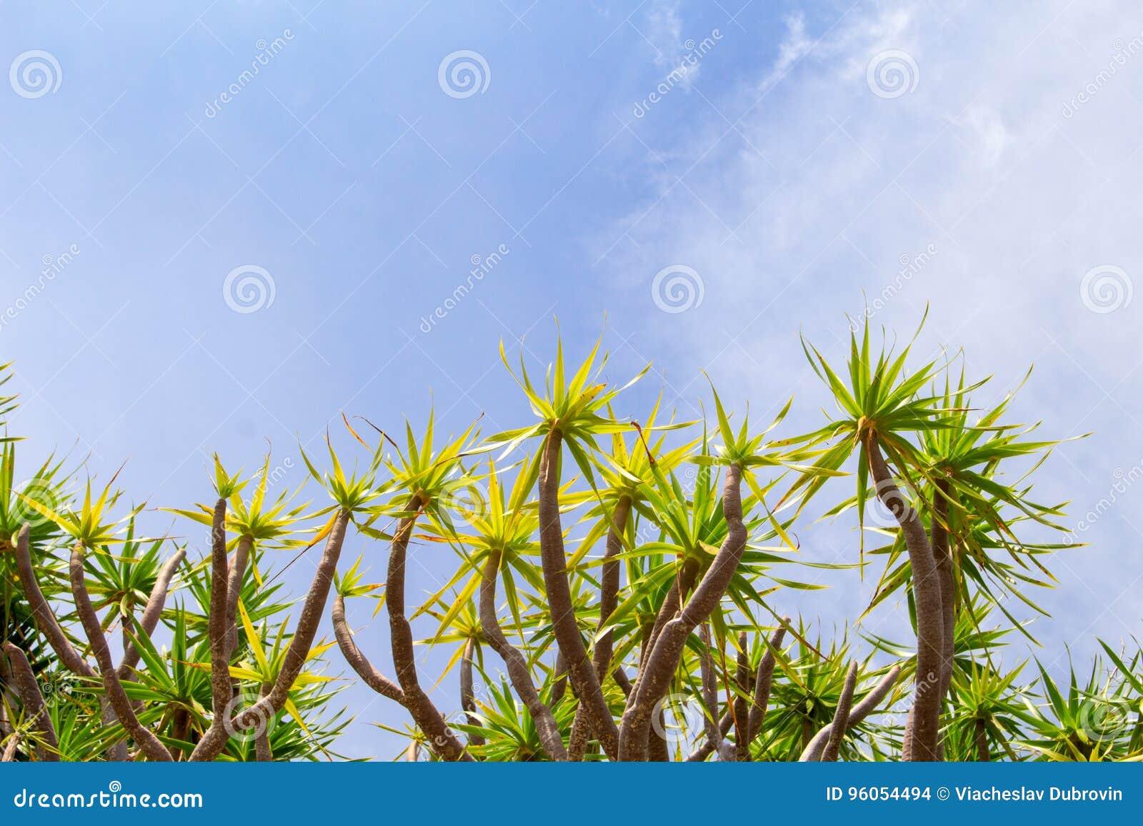 Plantes tropicales et ciel Jour ensoleillé sur l île tropicale Calibre de bannière de vacances d été