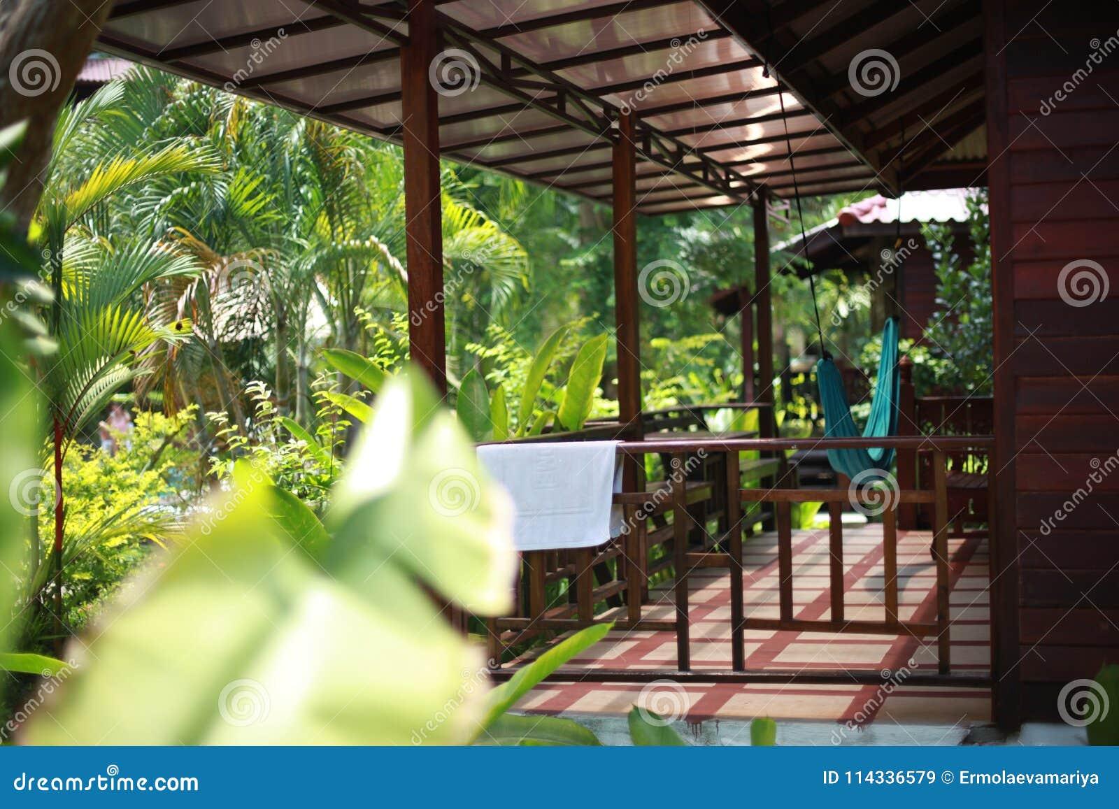 Plantes Tropicales Luxueuses Dans Une Station Thermale Avec Lhamac