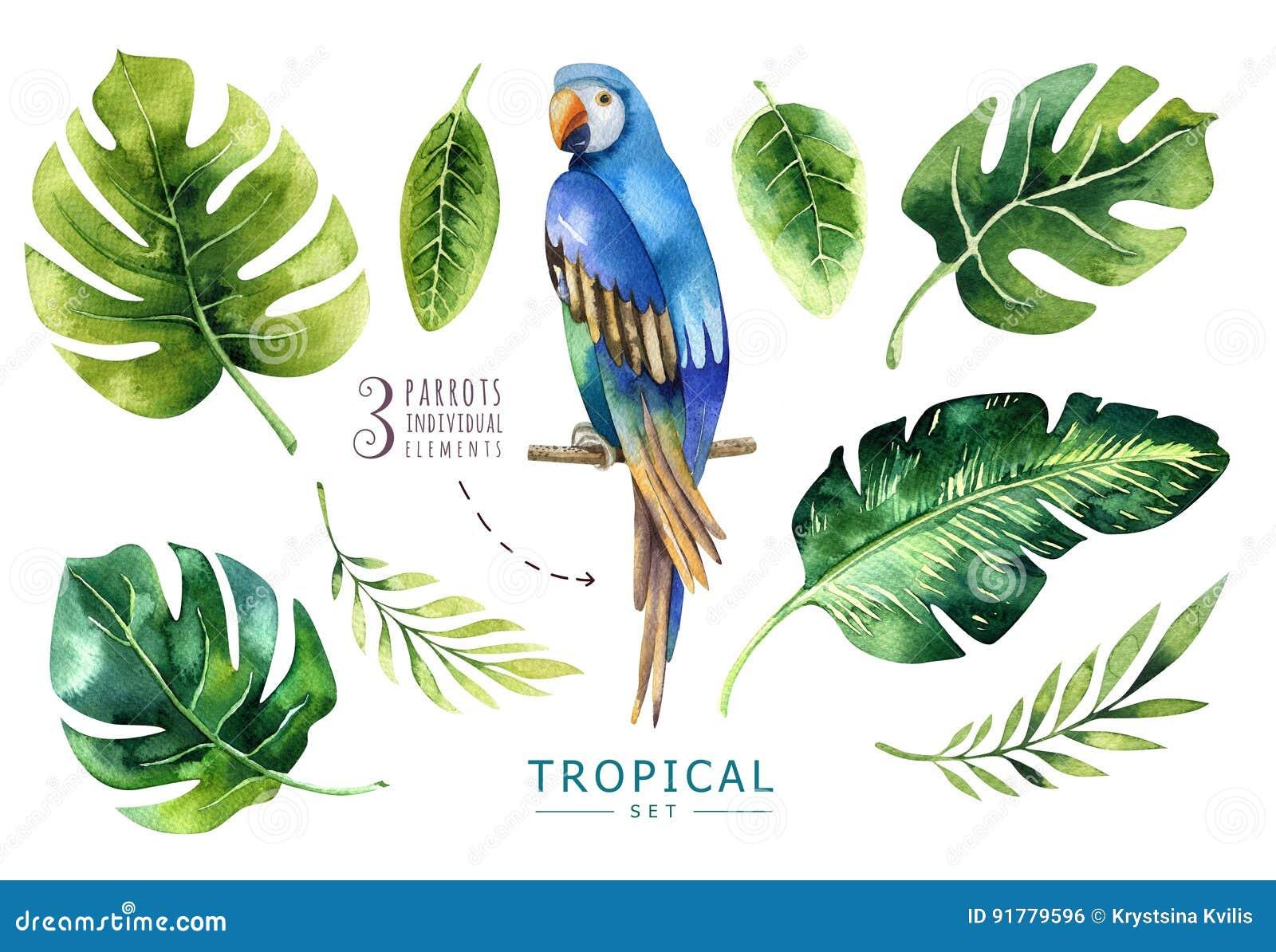 Plantes tropicales tirées par la main d aquarelle réglées et perroquet PA exotique