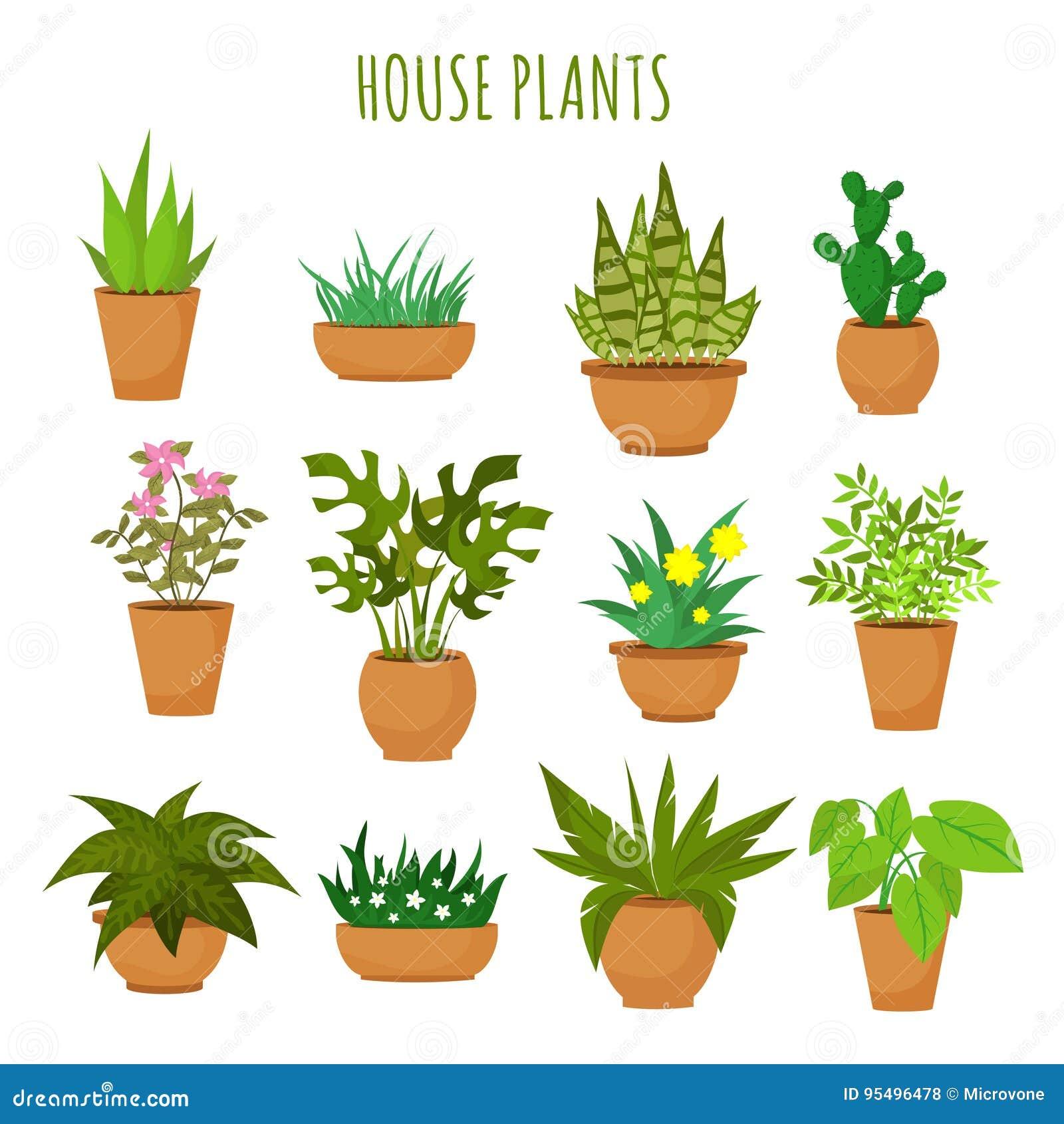 Plantes Vertes Et Fleurs De Maison D Intérieur D Isolement