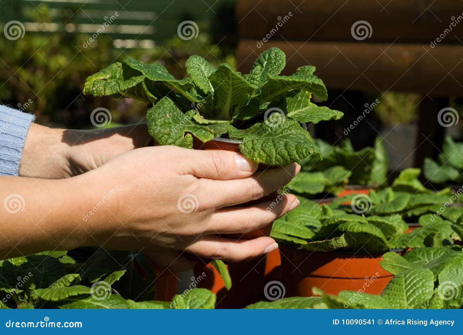 Plantes vertes mises en pot image stock image 10090541 for Plantes vertes