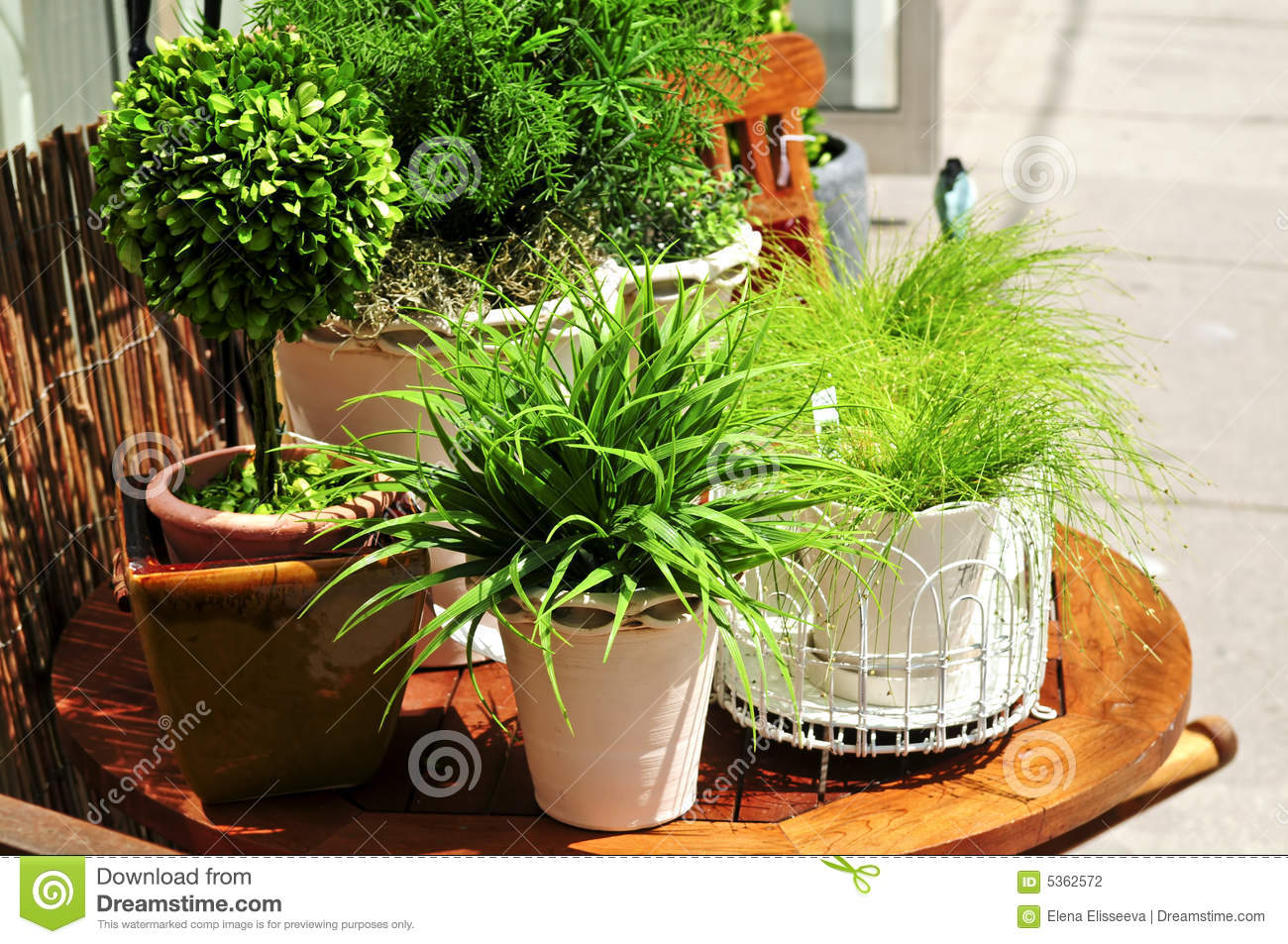 Plantes vertes mises en pot photographie stock image for Plantes vertes
