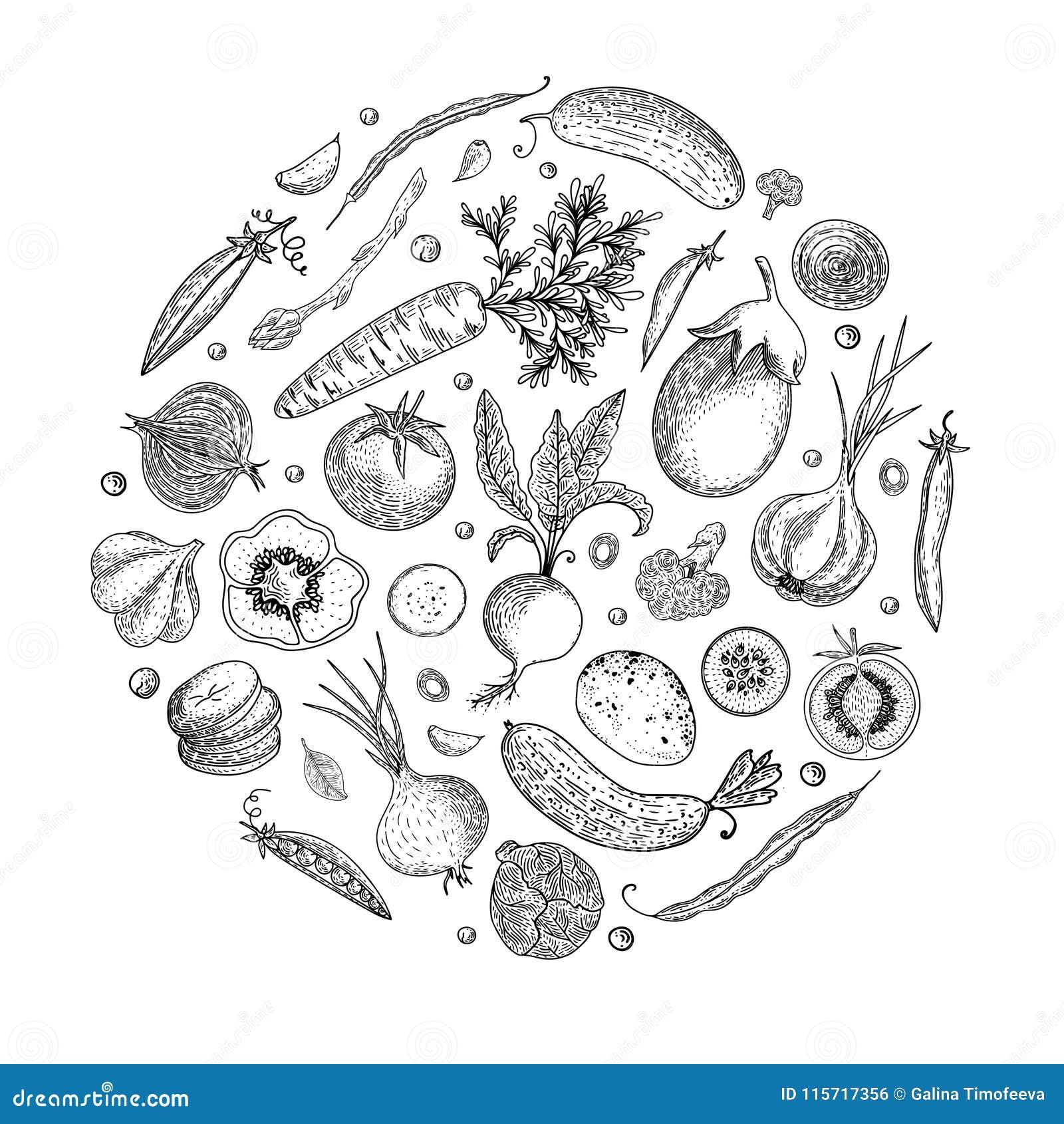 Plantilla del diseño del menú del mercado de los granjeros Ejemplo dibujado mano del vector del bosquejo del vintage Gráfico line