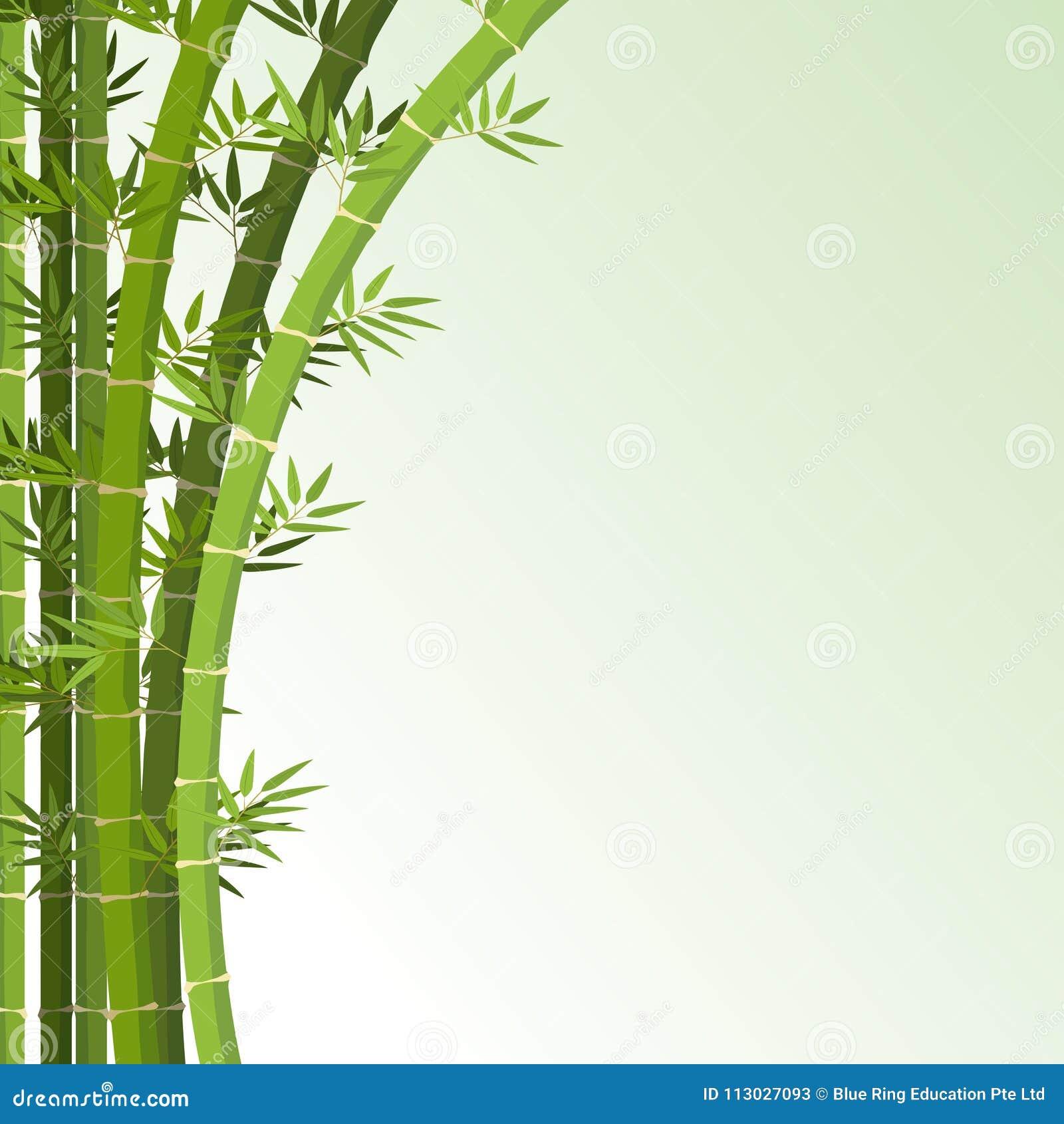 Plantilla del fondo con los árboles de bambú