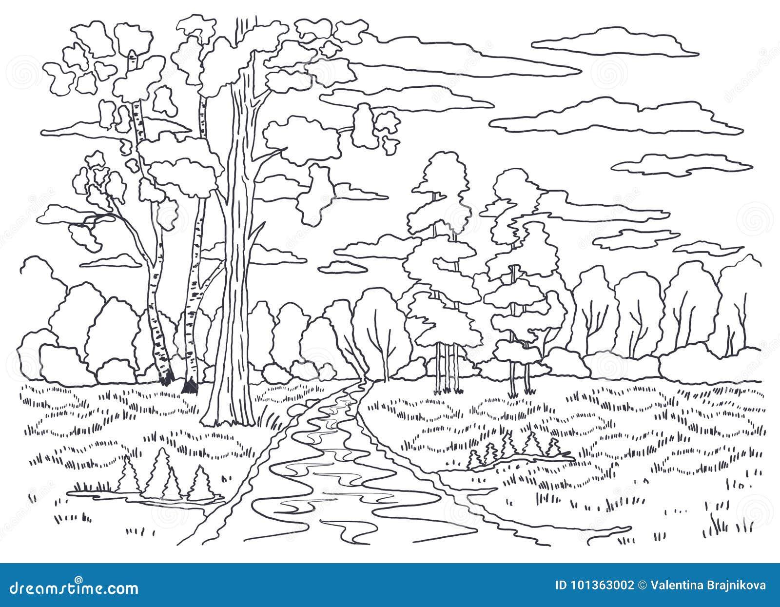 Plantilla Para Colorear Pintura De Paisaje Bosque árboles Abedul
