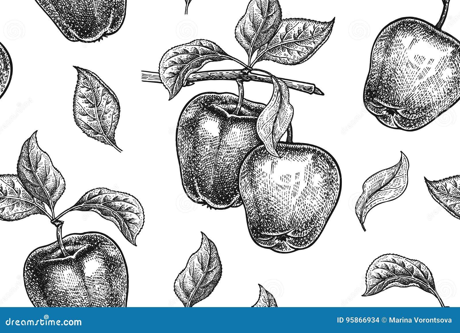 Plantilla Para El Diseño De La Cocina Modelo Con La Manzana ...