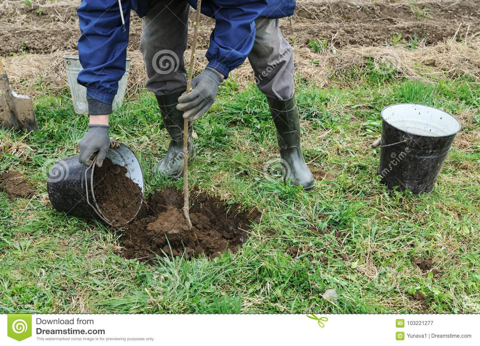 Planting Fruit Trees Stock Image Image Of Farm Garden 103221277