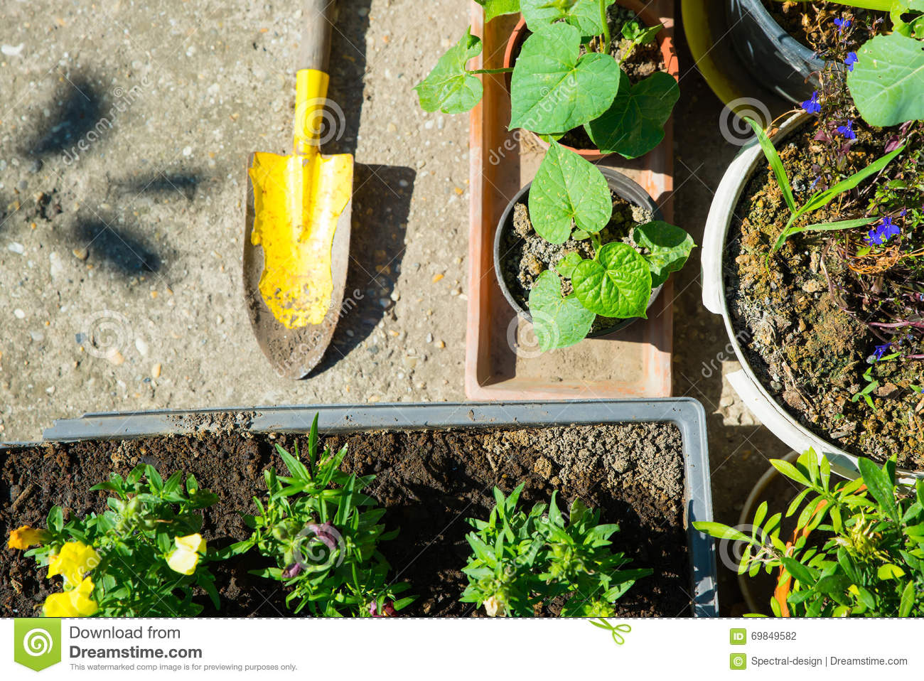 Planting in the garden stock photo image 69849582 for Gardening tools used in planting crossword clue