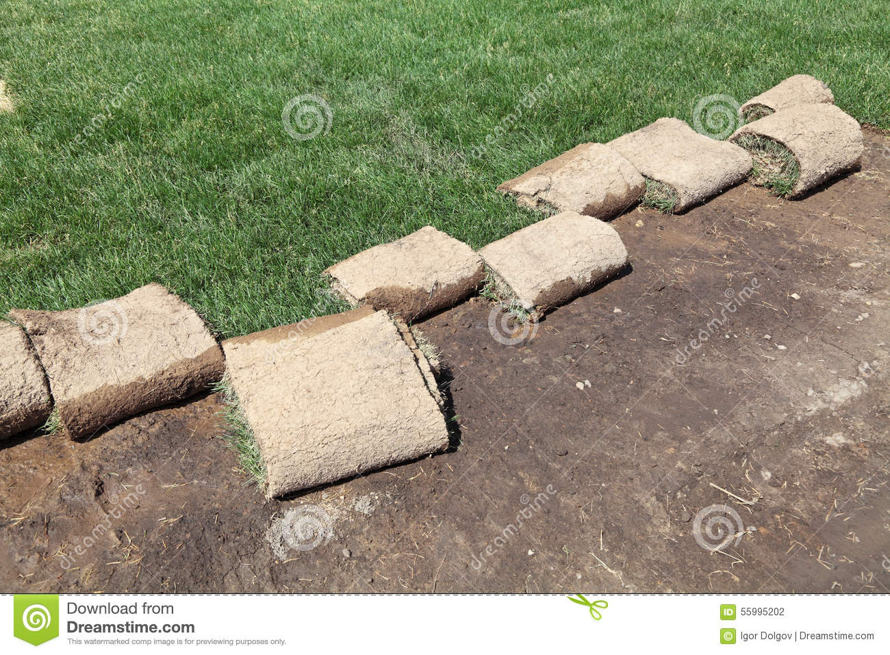 Landscaping Grass Roll : Planting of greenery stock photo image