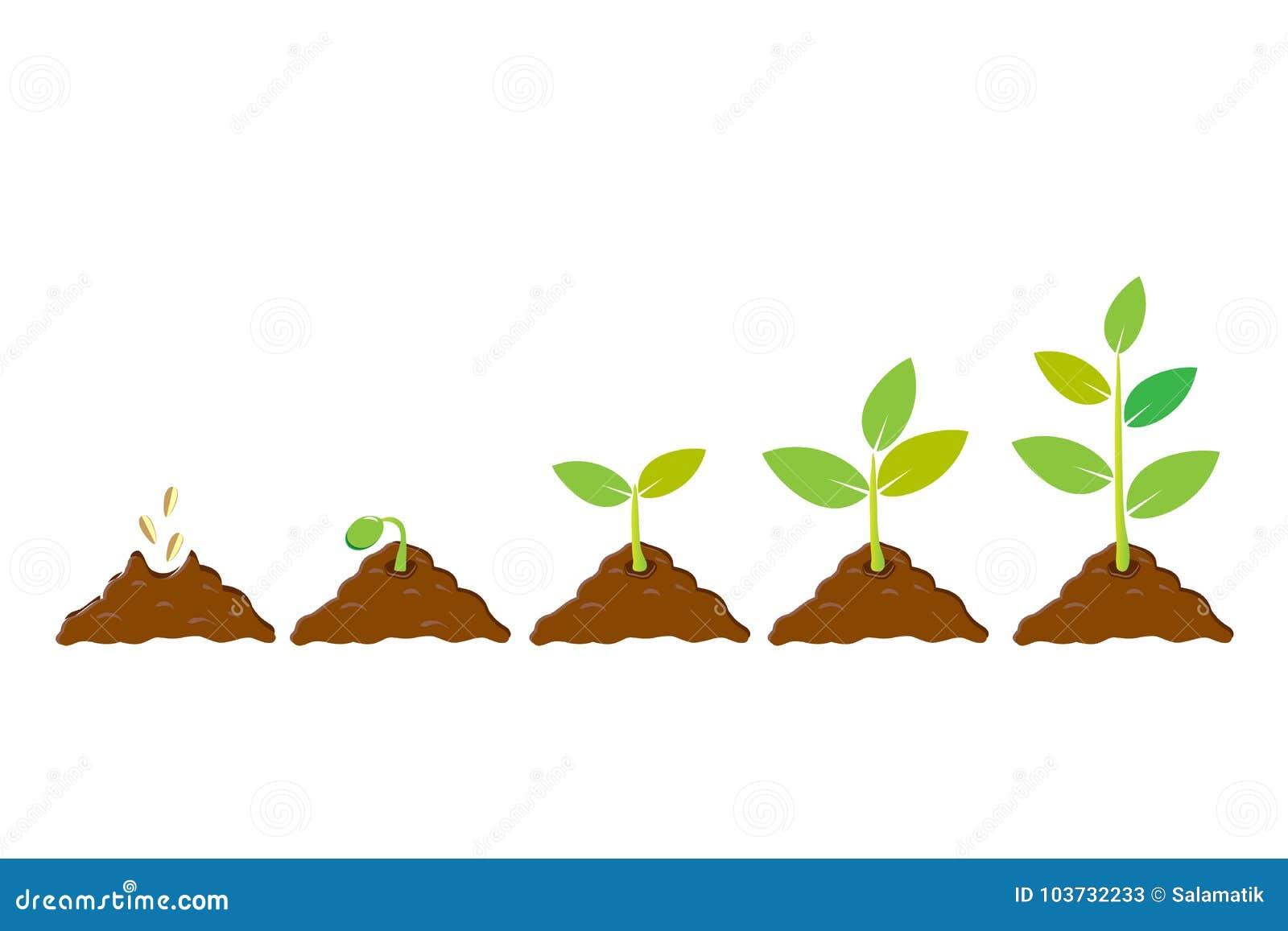 grow cartoons  illustrations  u0026 vector stock images