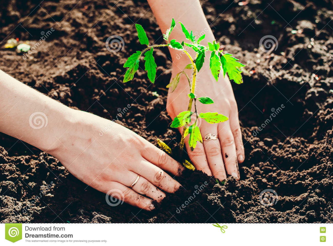 Soil for seedlings with their own hands - a proven technology for the preparation of fertile soil for plants 100