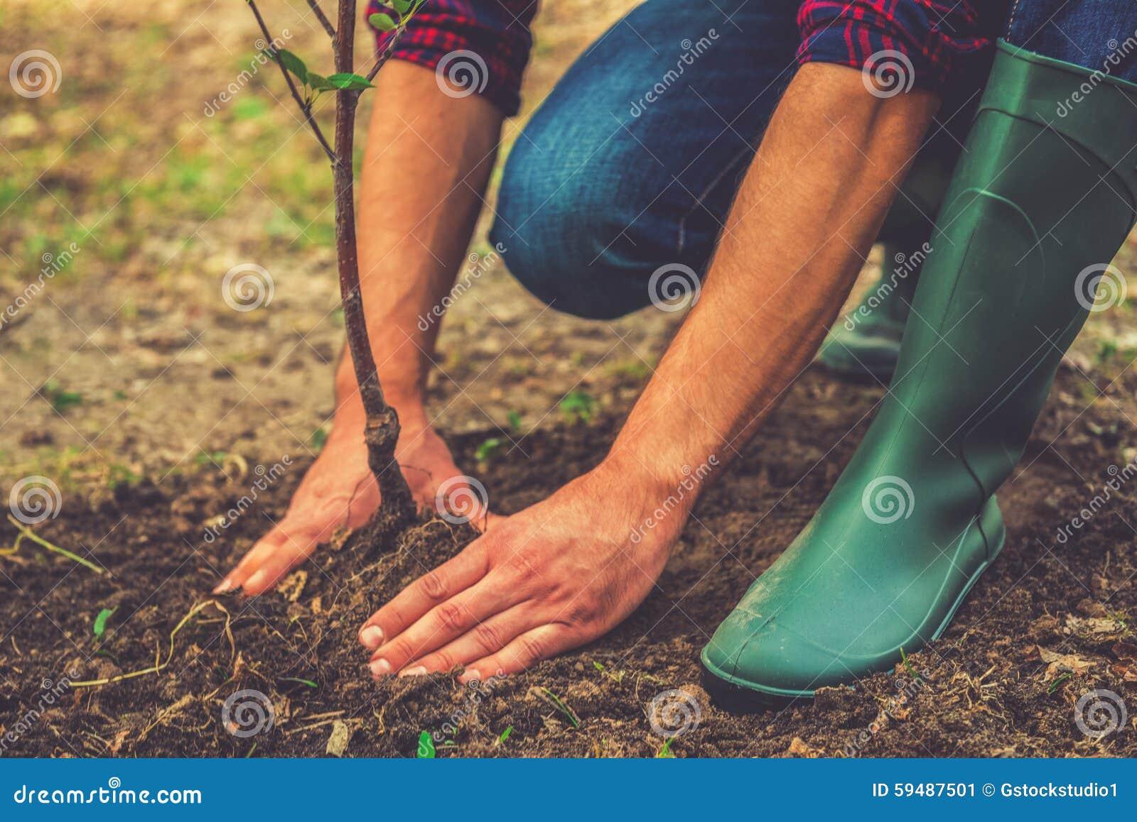 Planting a tree.