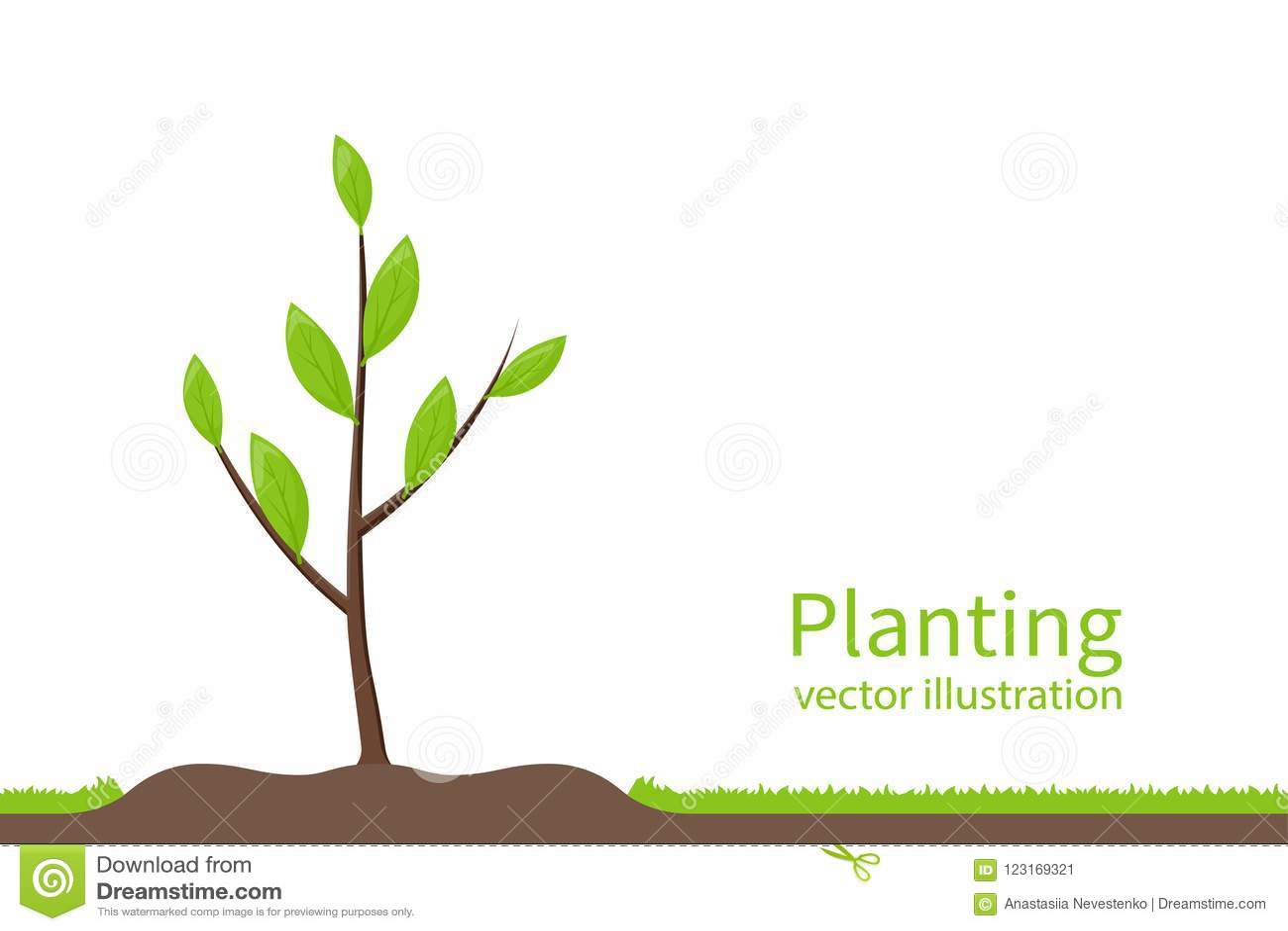 Planting tree. Process planting concept