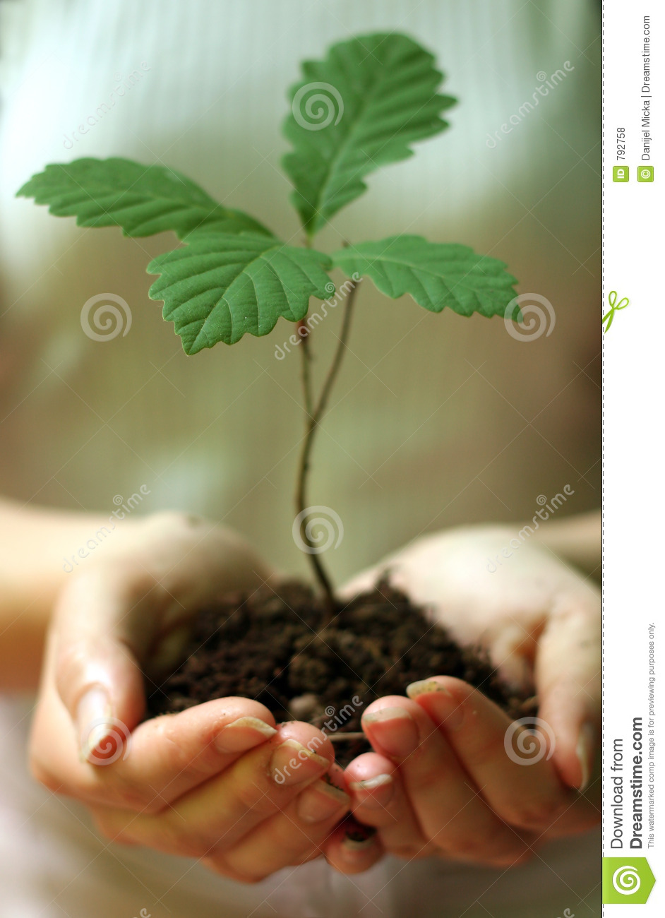 Planting trees stock photo. Image of green, tree, forest ...