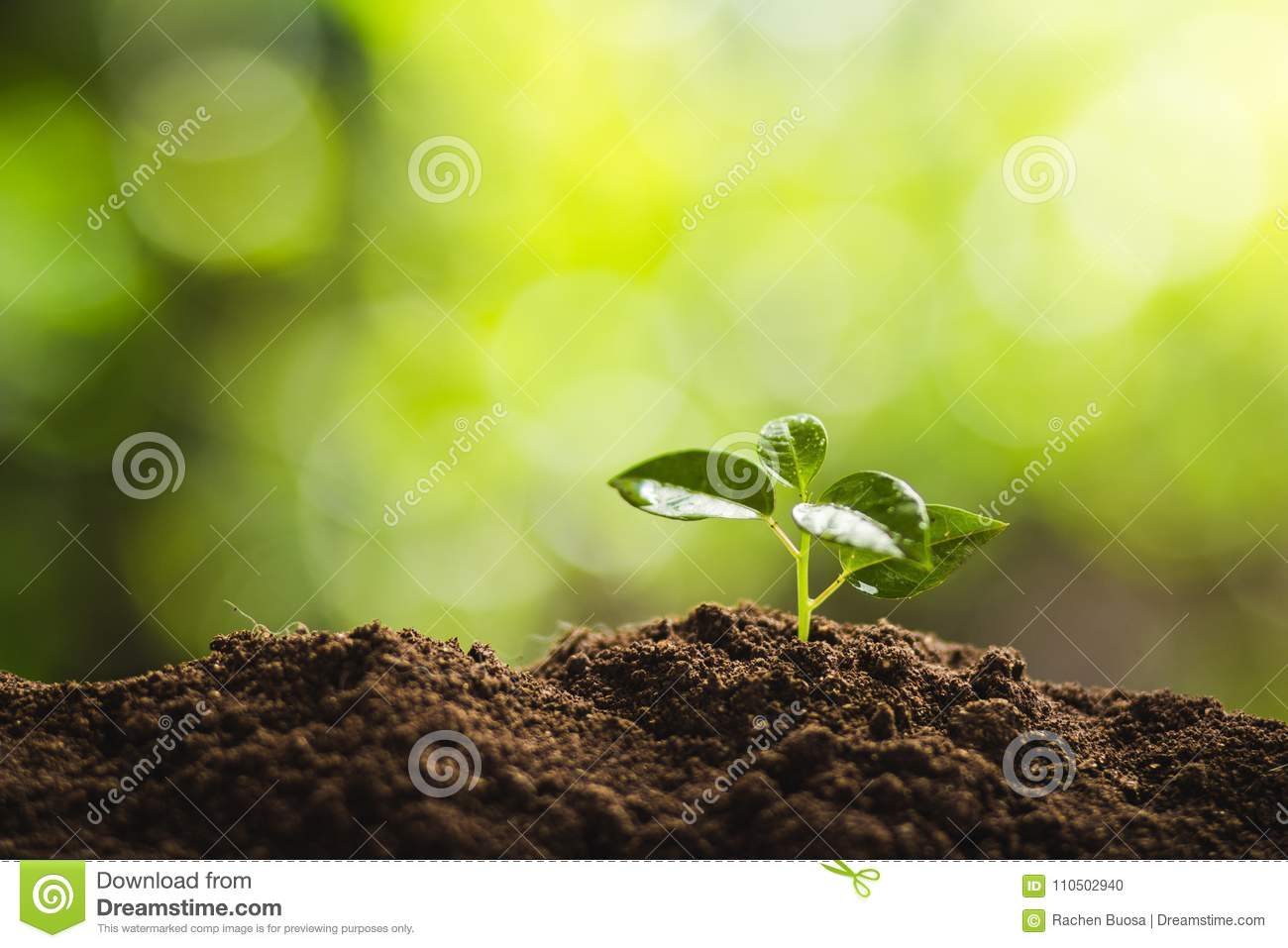 Planting Trees Tree Growth Seeding Fourth Step Seed Is A
