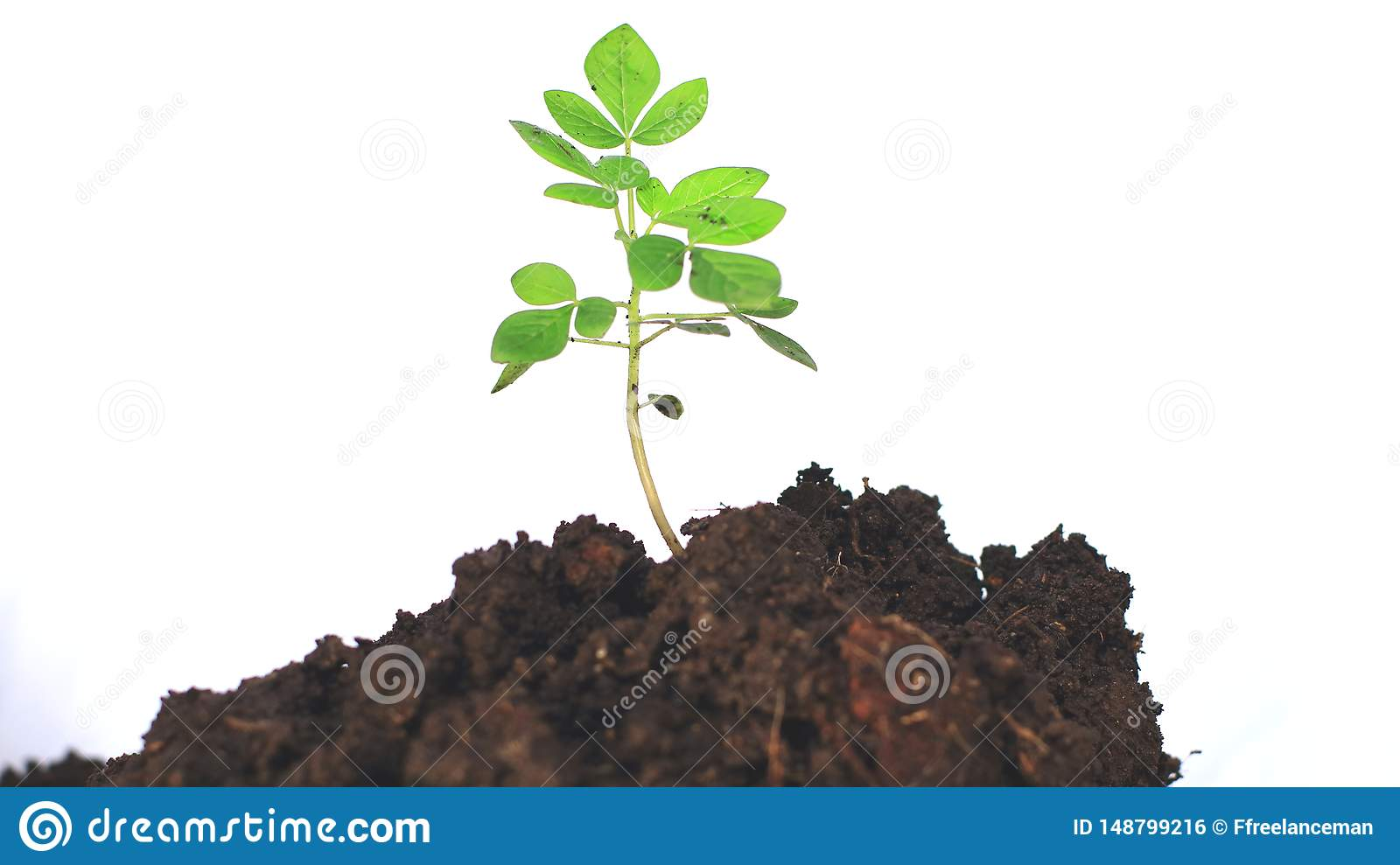 Planting trees on a white background