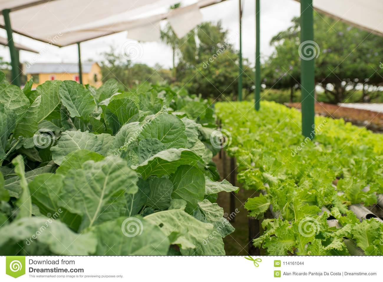 Planting Various Organic Vegetables In The Greenhouse