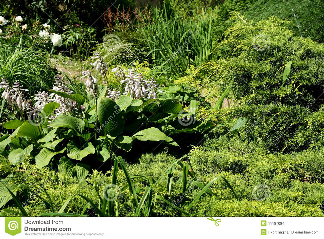 plants arrangement in a garden stock images image 11187084