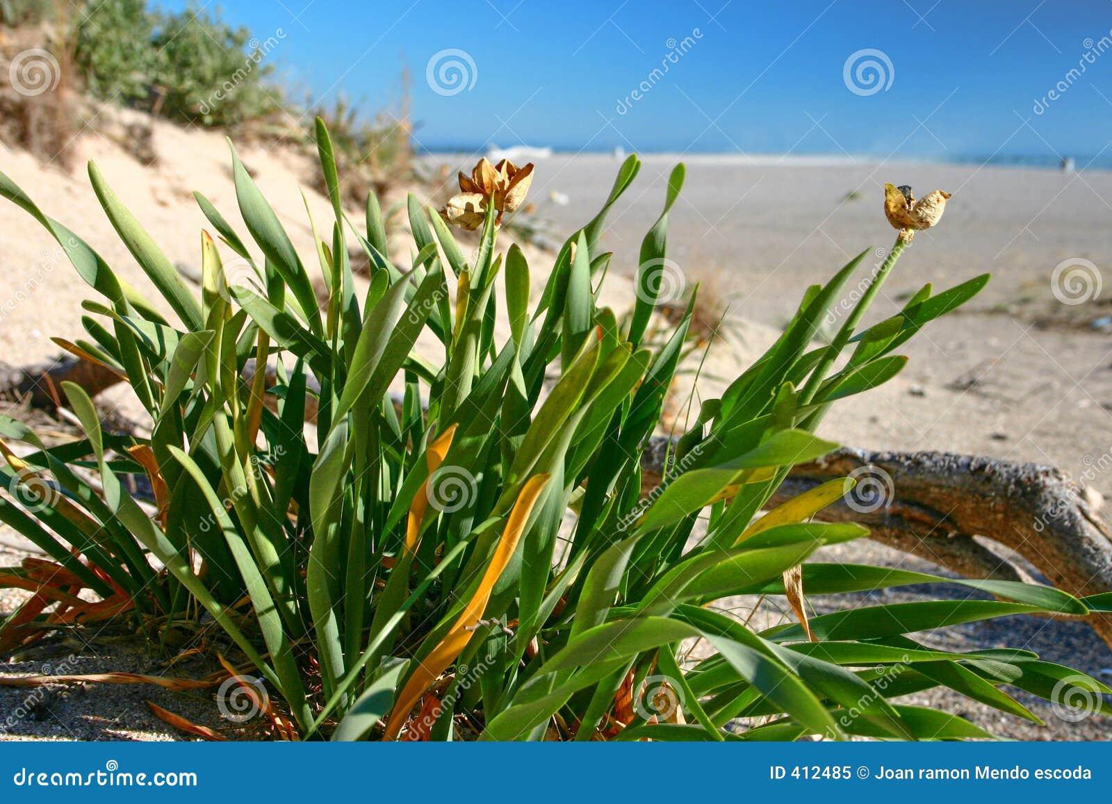 Plants on a beach