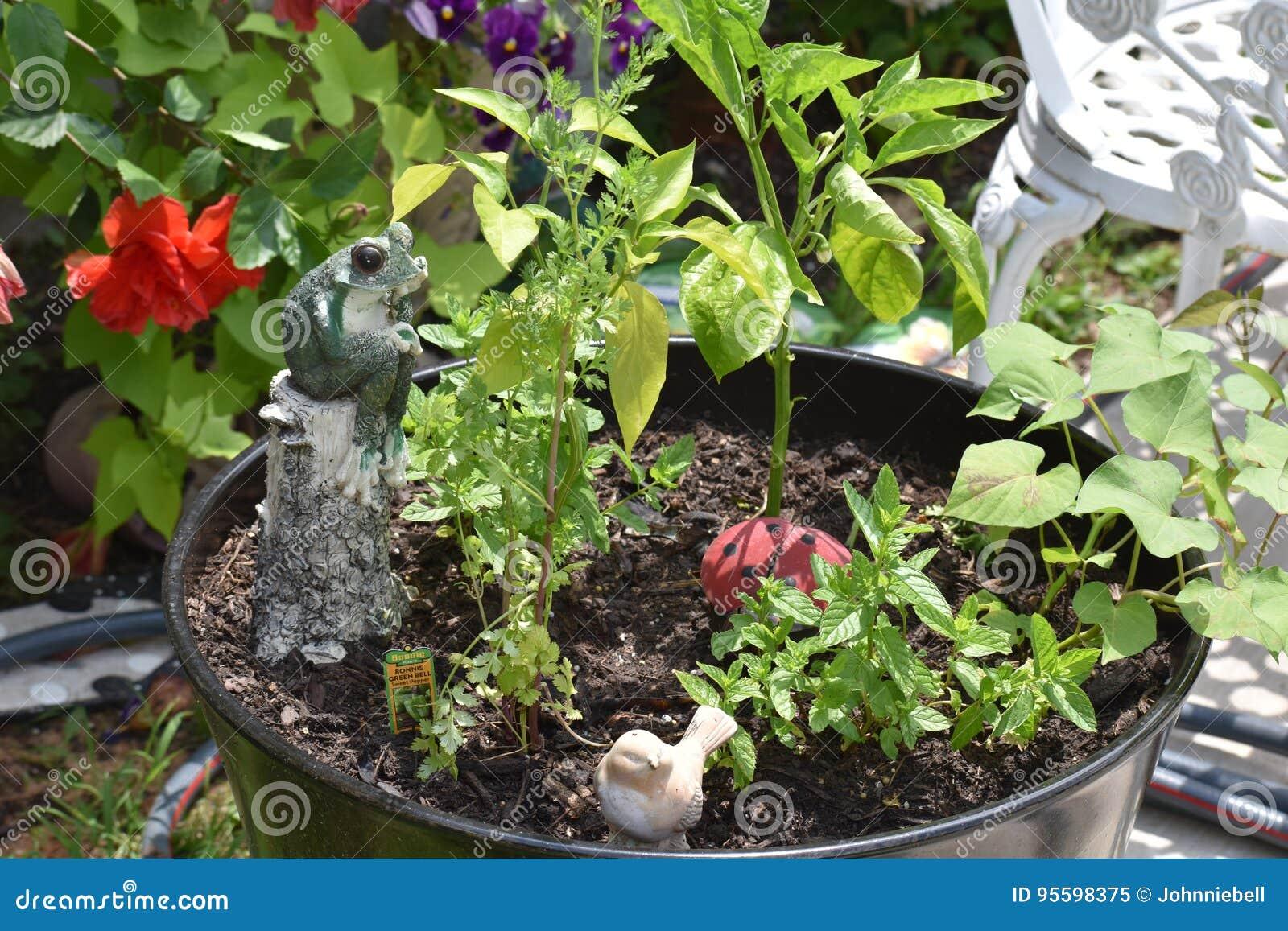 Plants stock image image of bush incienso apple bilberry 95598375 download comp izmirmasajfo