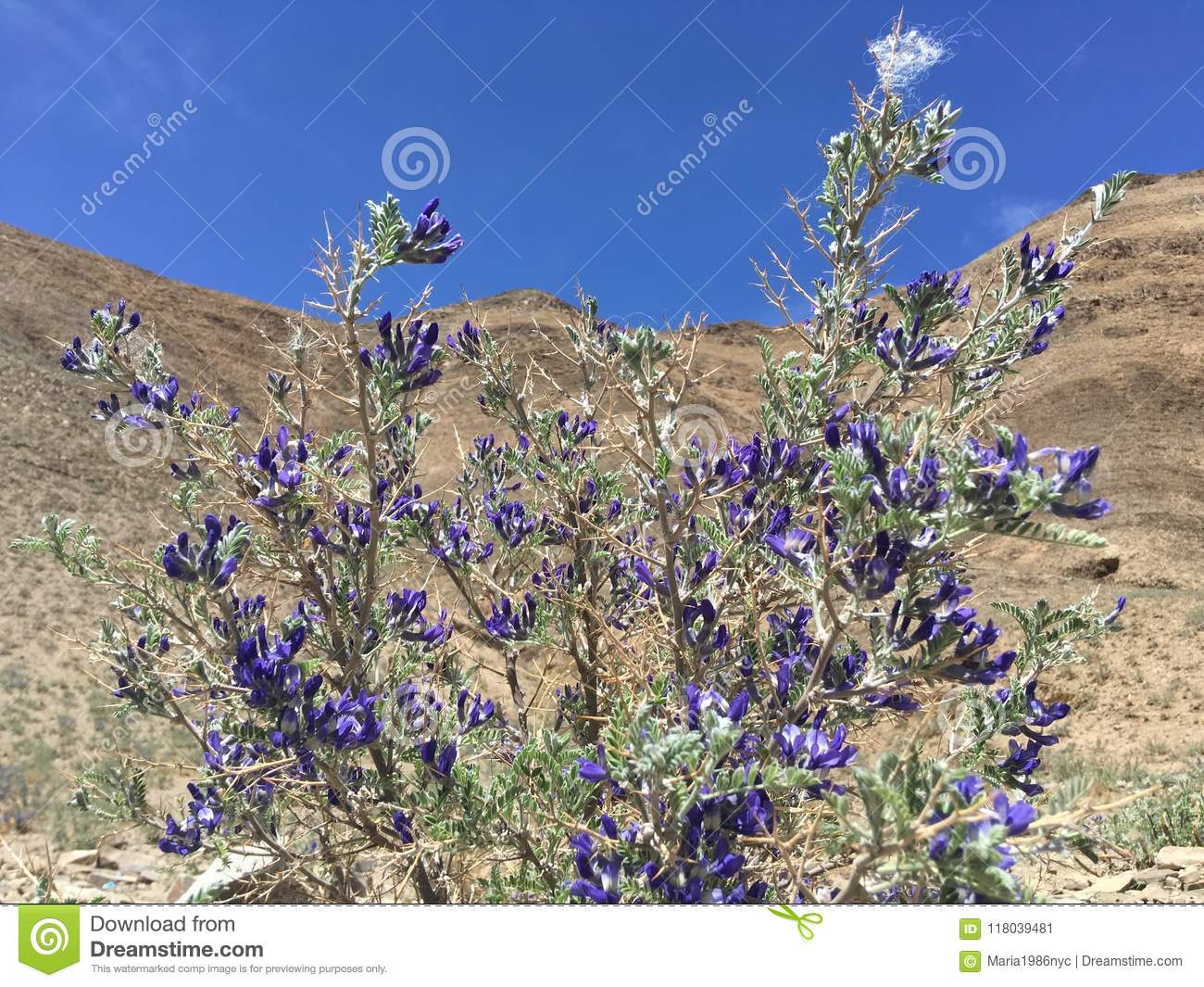 Plants Blossoming With Purple Flowers In Spring In Tibet In China