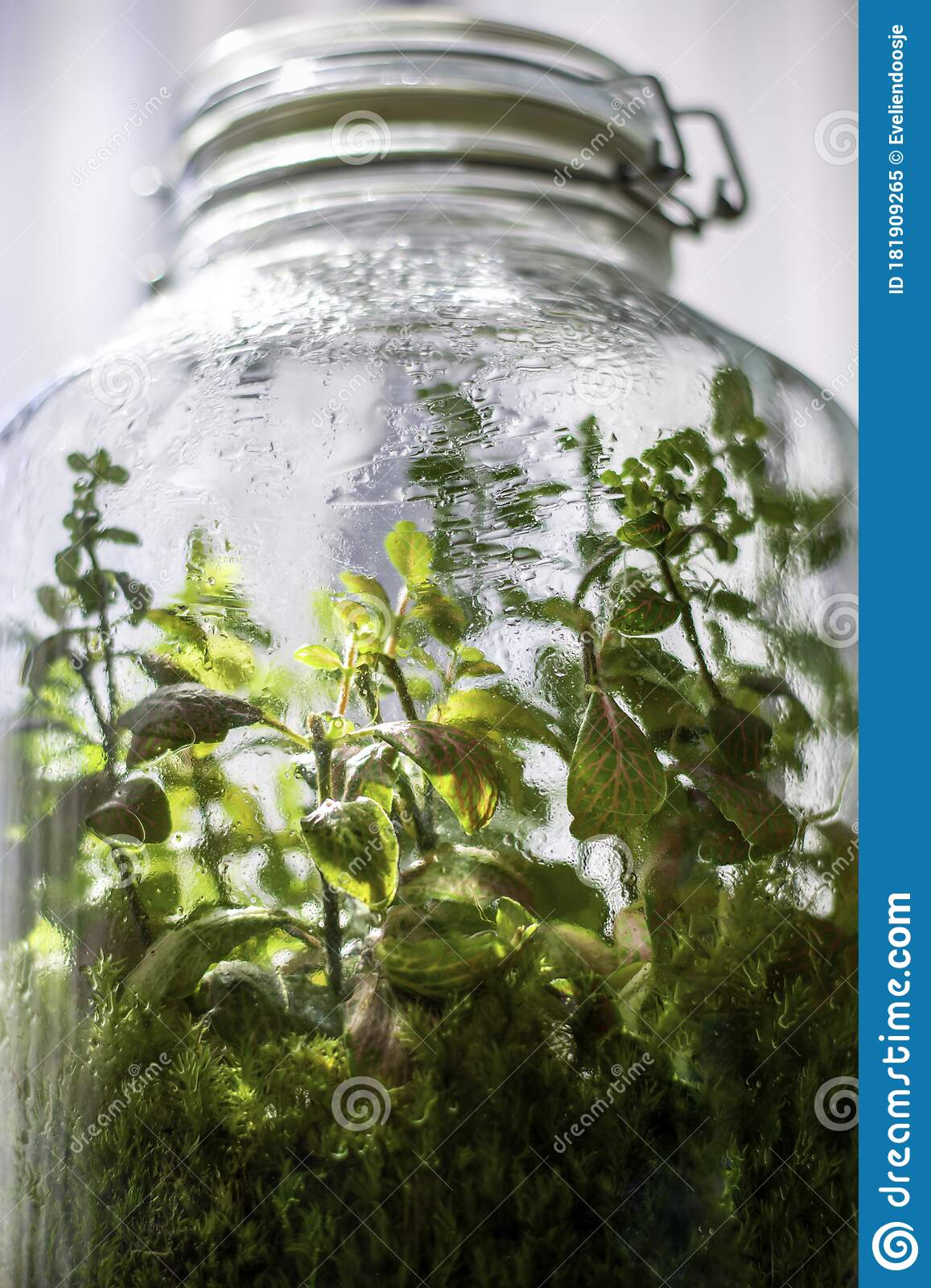 Plants In A Closed Glass Bottle Terrarium Jar Small Ecosystem Stock Image Image Of Enclosed Condensation 181909265