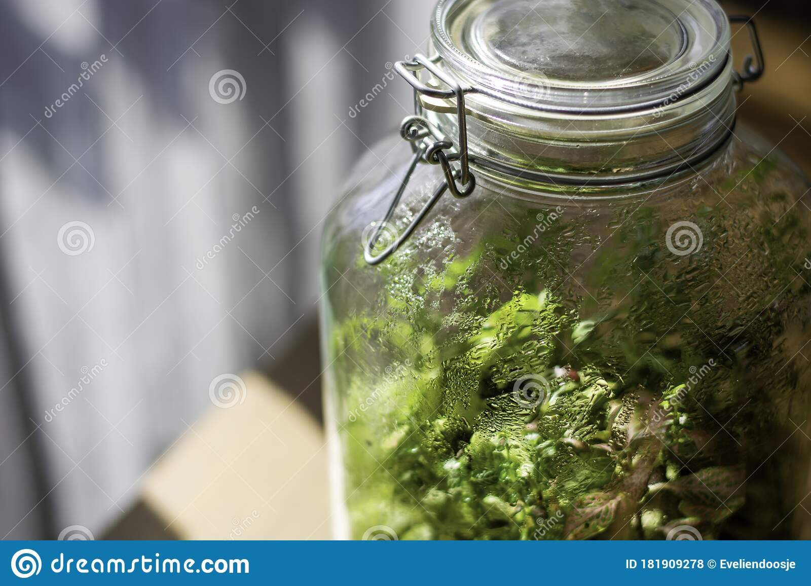Plants In A Closed Glass Bottle Terrarium Jar Small Ecosystem Stock Photo Image Of Drops Growth 181909278