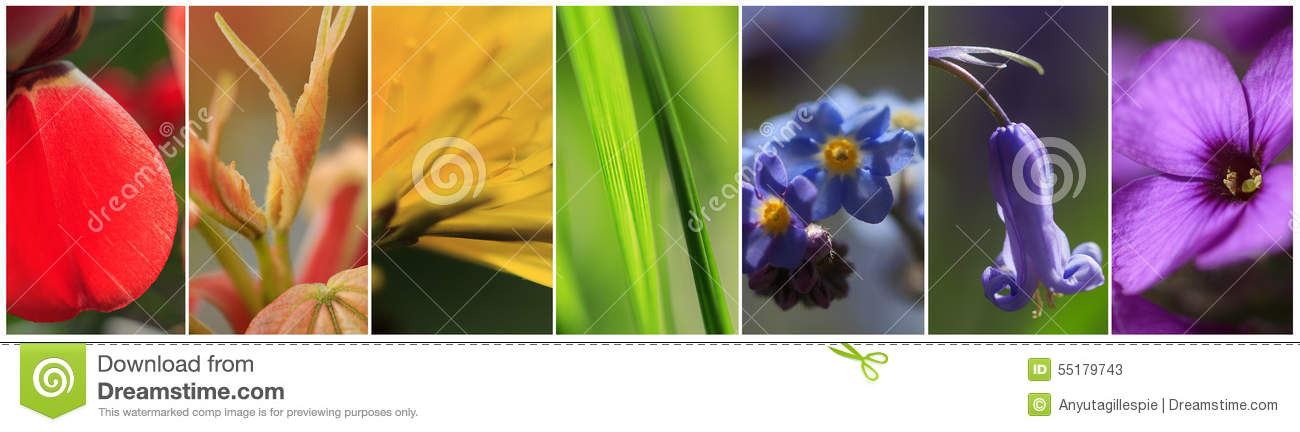 Download The Plants In The Colors Of The Rainbow Stock Image - Image of grass, plants: 55179743