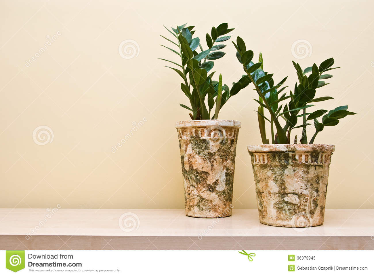 plants in decorative clay pots royalty free stock photo