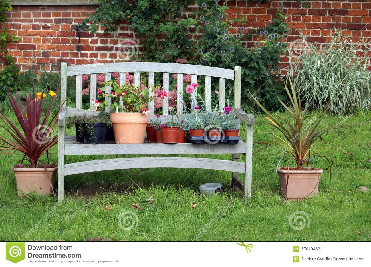 plants and flowers in pots on a wooden garden seat or bench stock