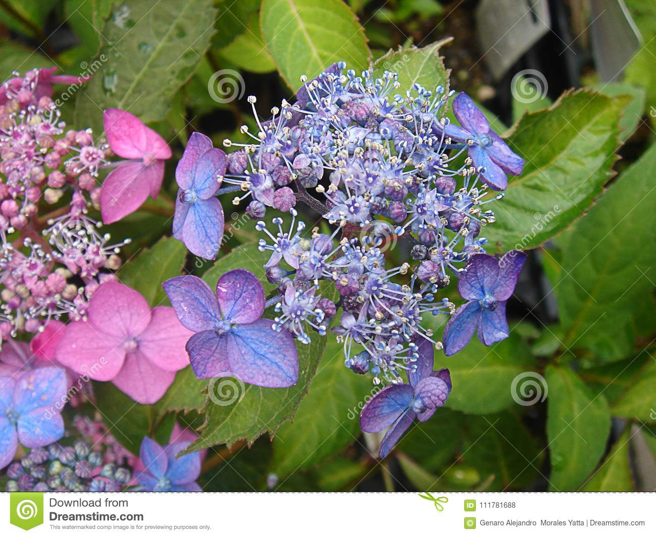 Flower touch colors