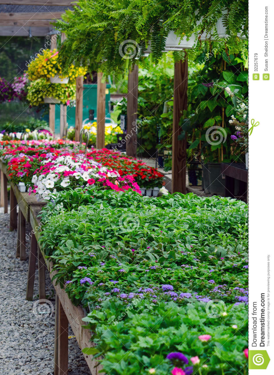Plants and flowers for sale royalty free stock images for Plants for sale