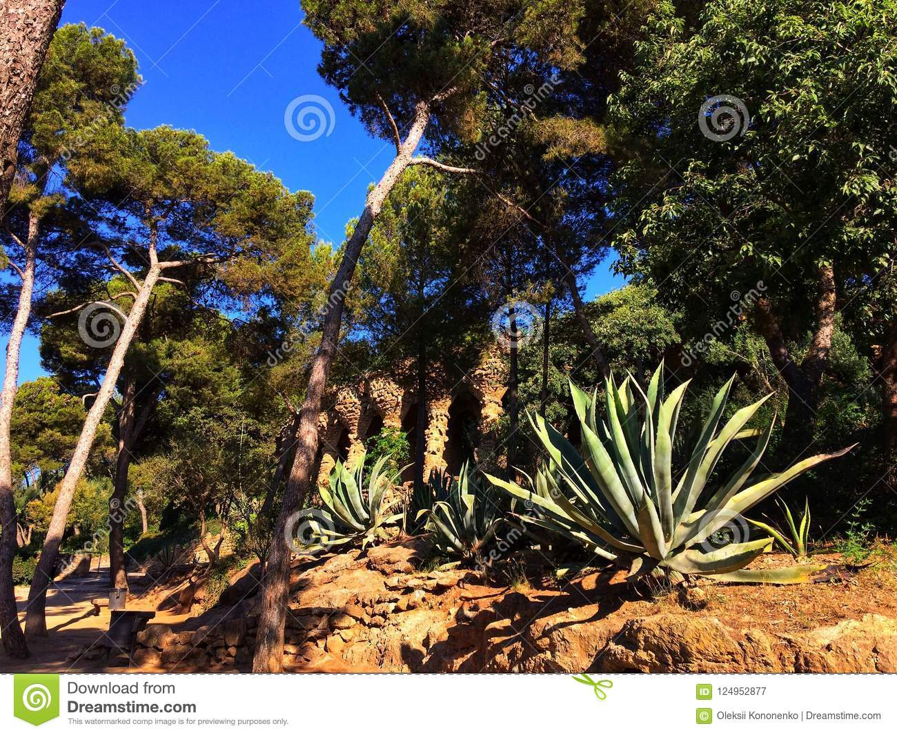 Plants in the garden stock image. Image of leaf, arid - 124952877