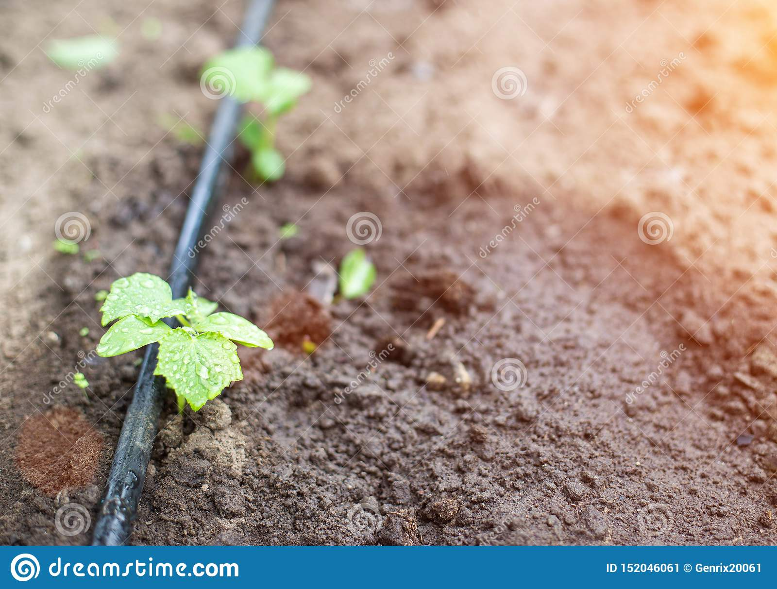 Plants Get Water Using Modern Irrigation System Drip