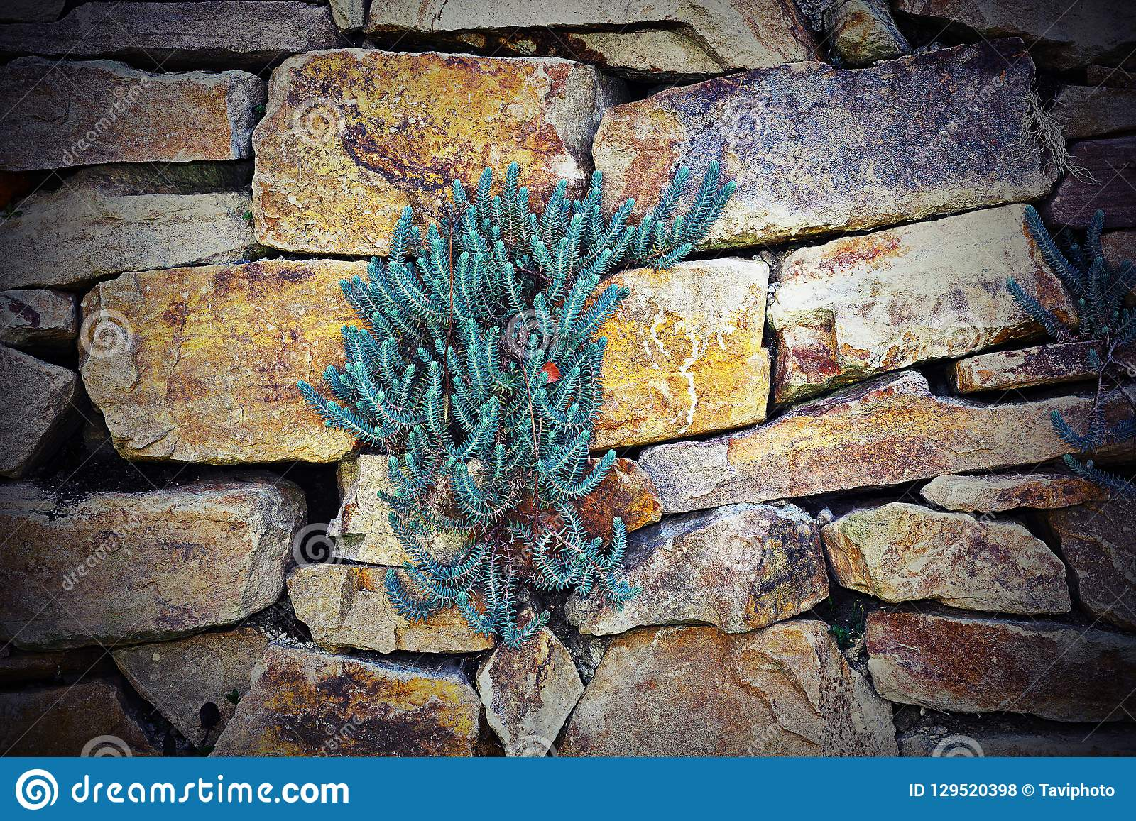 Plants growing on stone wall