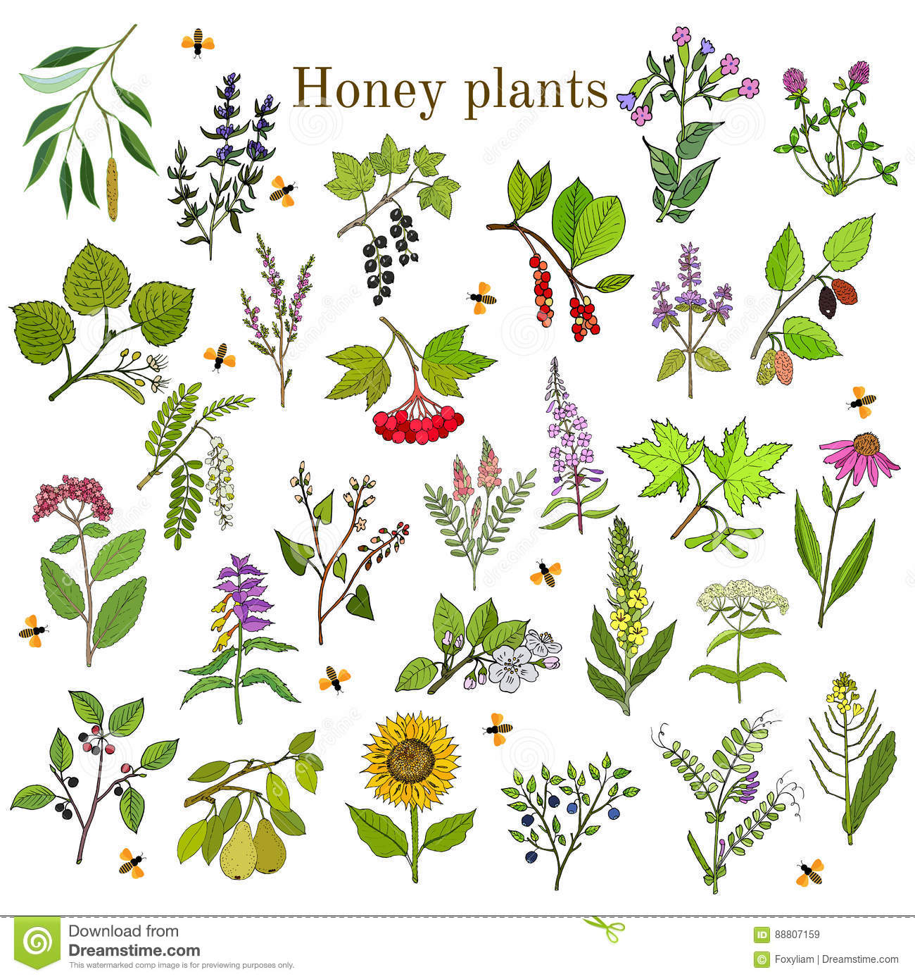 Plants - Nectar Sources For Honey Bees Stock Vector