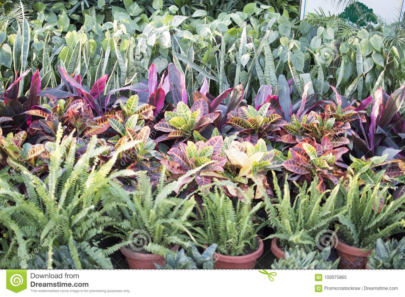 Plants In Pots For Sale At Nursery Stock Image Image Of Grass Bearded 100075865