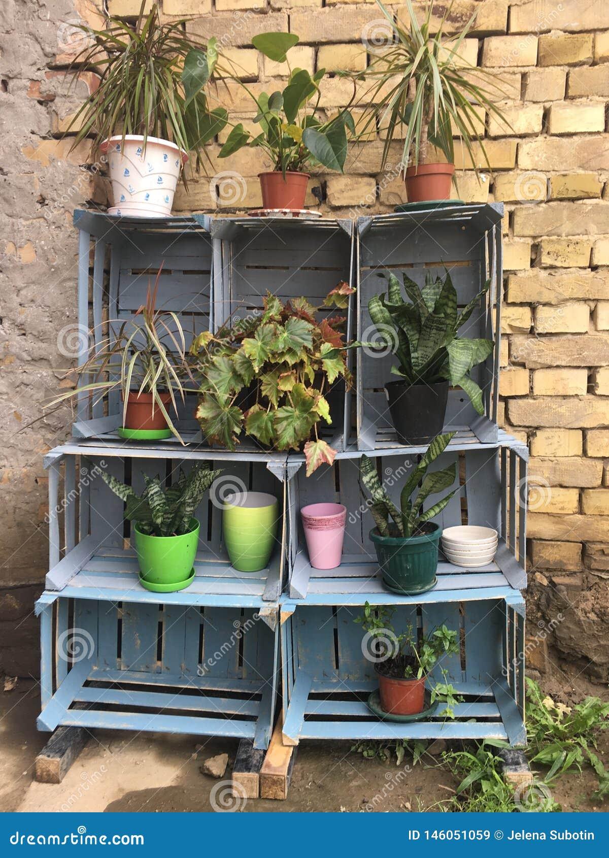 Plants in pots on shelves