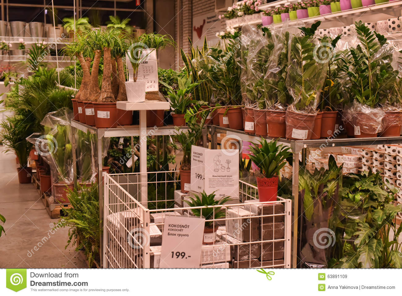 Plants In Pots In The Store Editorial Stock Image - Image ...