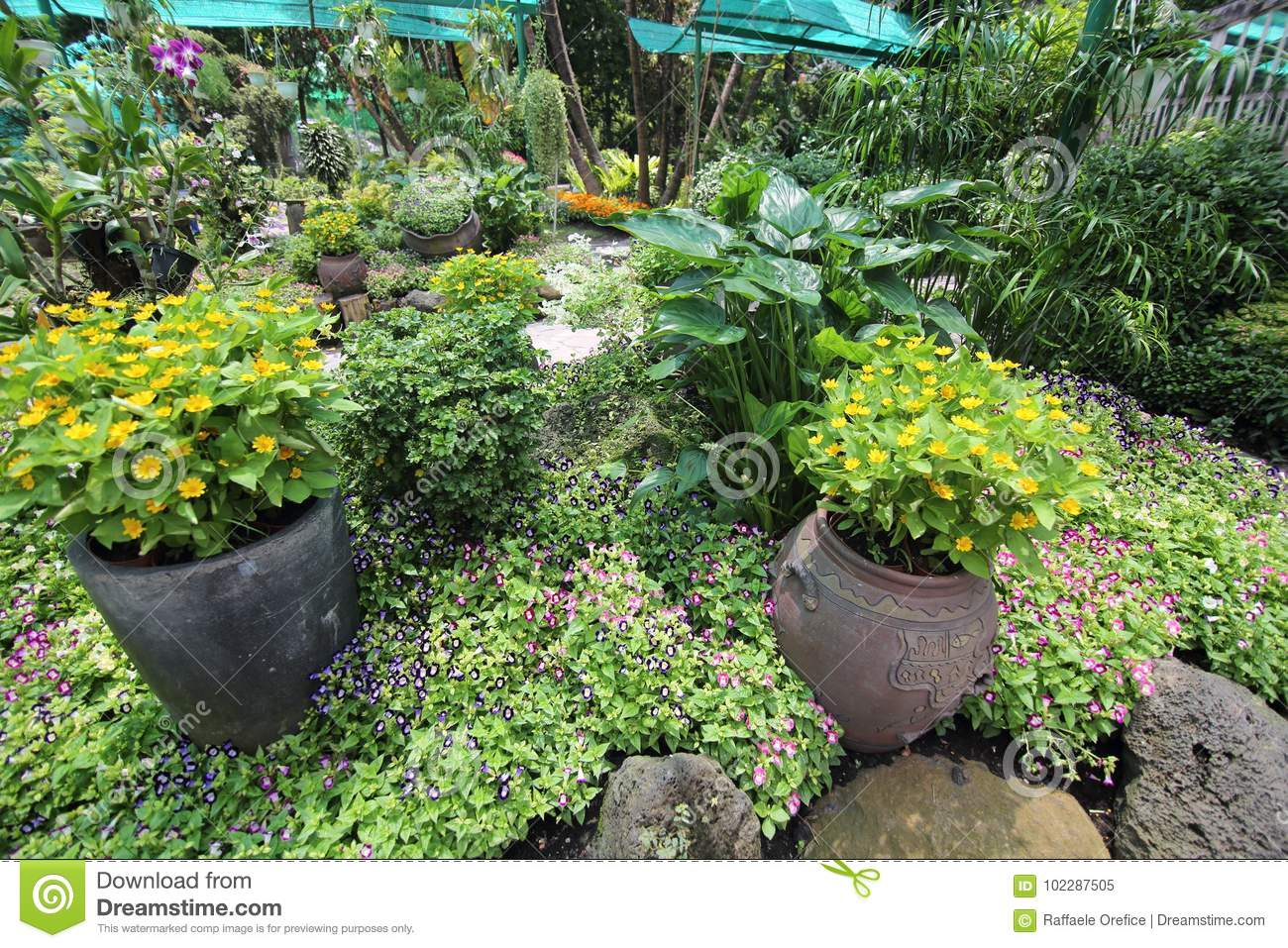 Plants at saigon zoo and botanical gardens stock image image of plant asia 102287505 for What time does the botanical gardens close