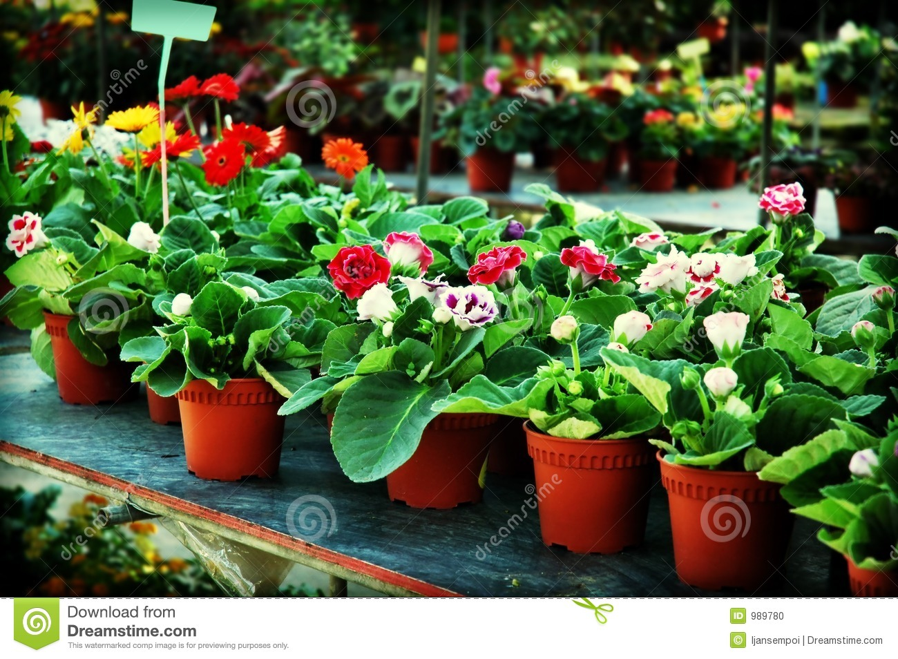 Plants for sale stock photo image 989780 for Plants for sale